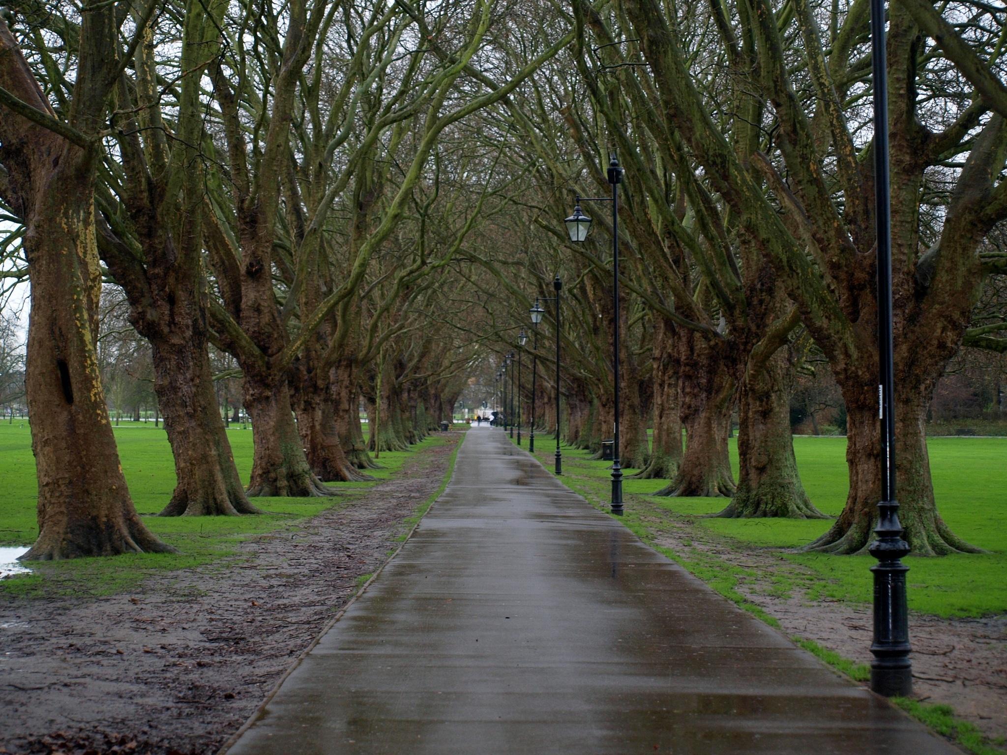 The Avenue by Simon Hill Photographer
