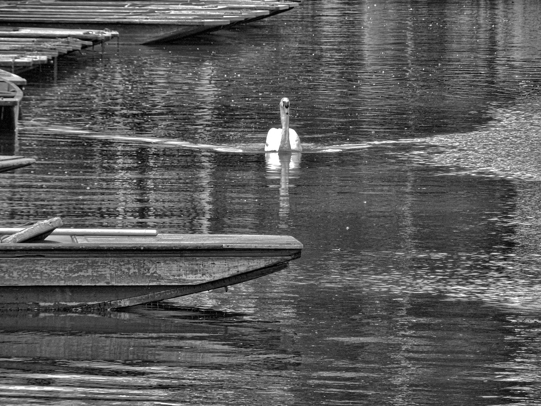 The Swan by Simon Hill