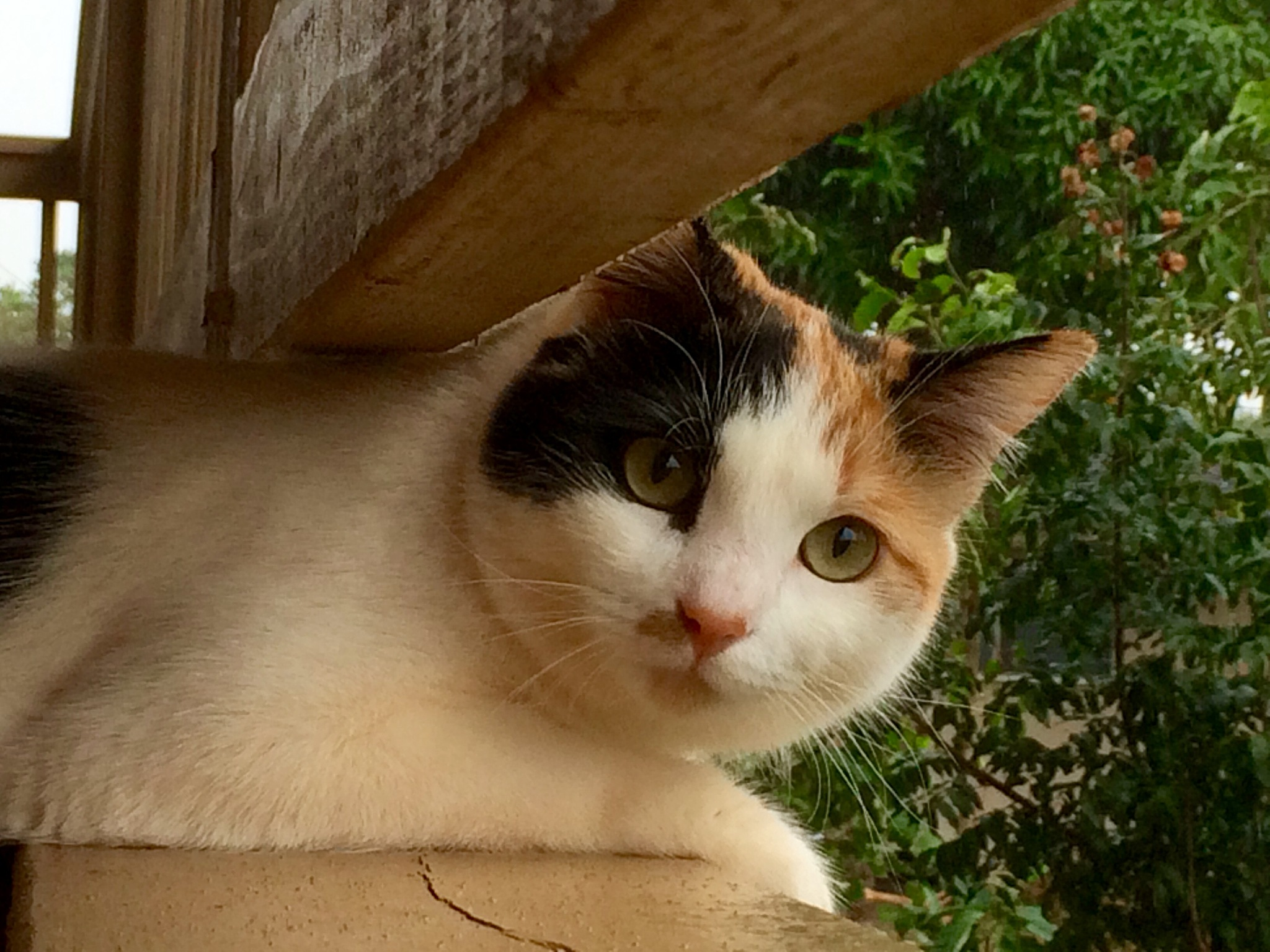 Cat Scan by gstyer