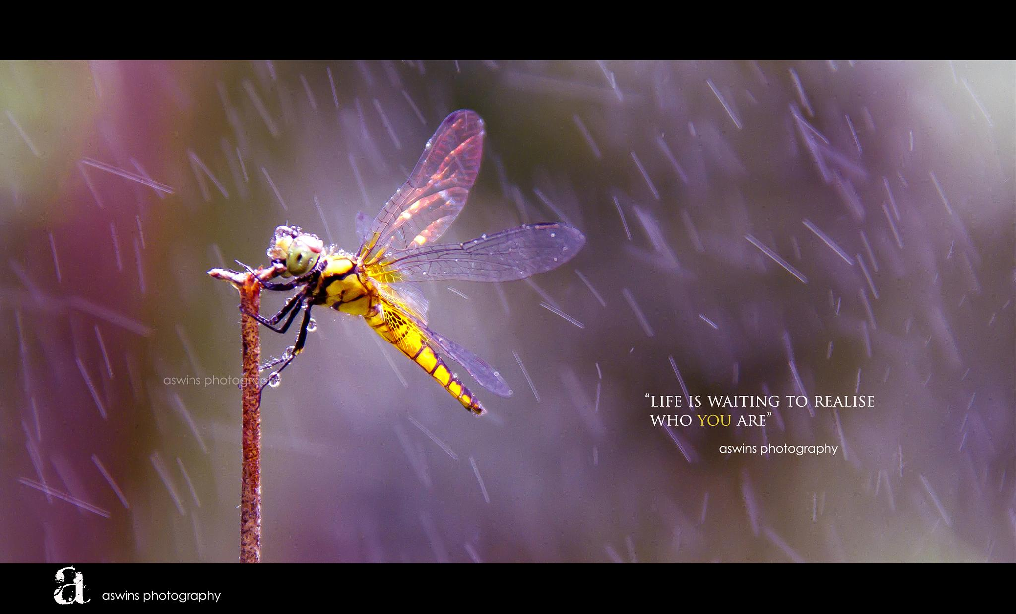 Photo in Random #macro #nature #butterfly #dragonfly #rain #picture #photography