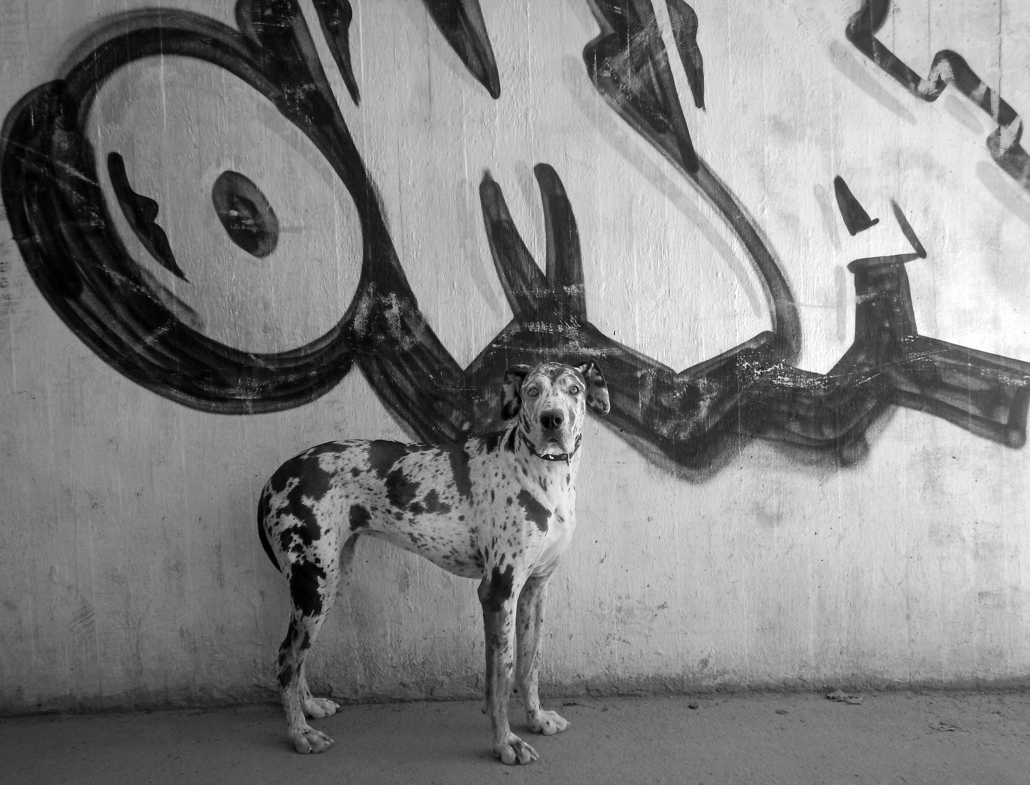 Vilda The Super urban dog by Pet Shop Boys :-) by Vilda
