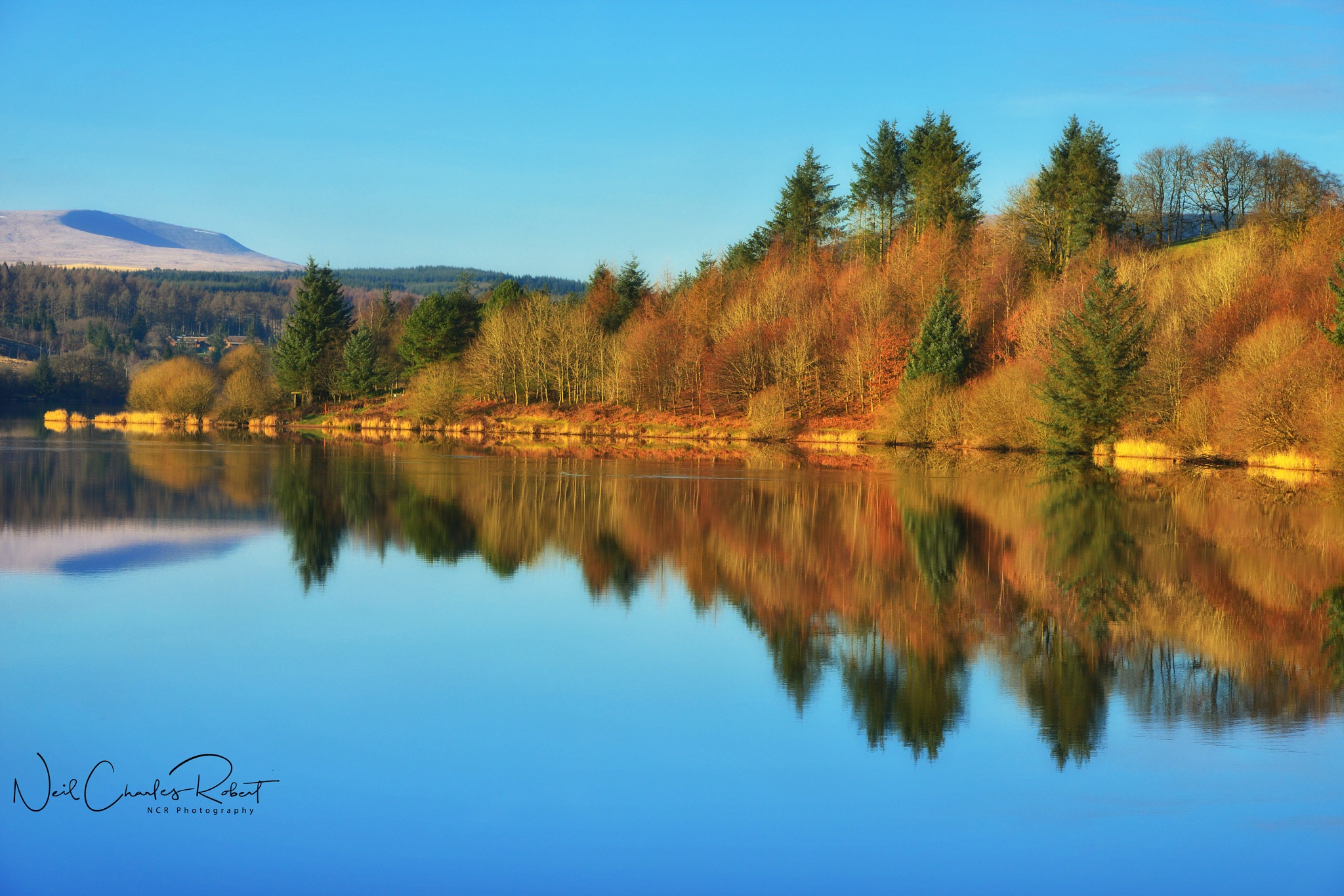 Golden Reflections.. by ncr photography