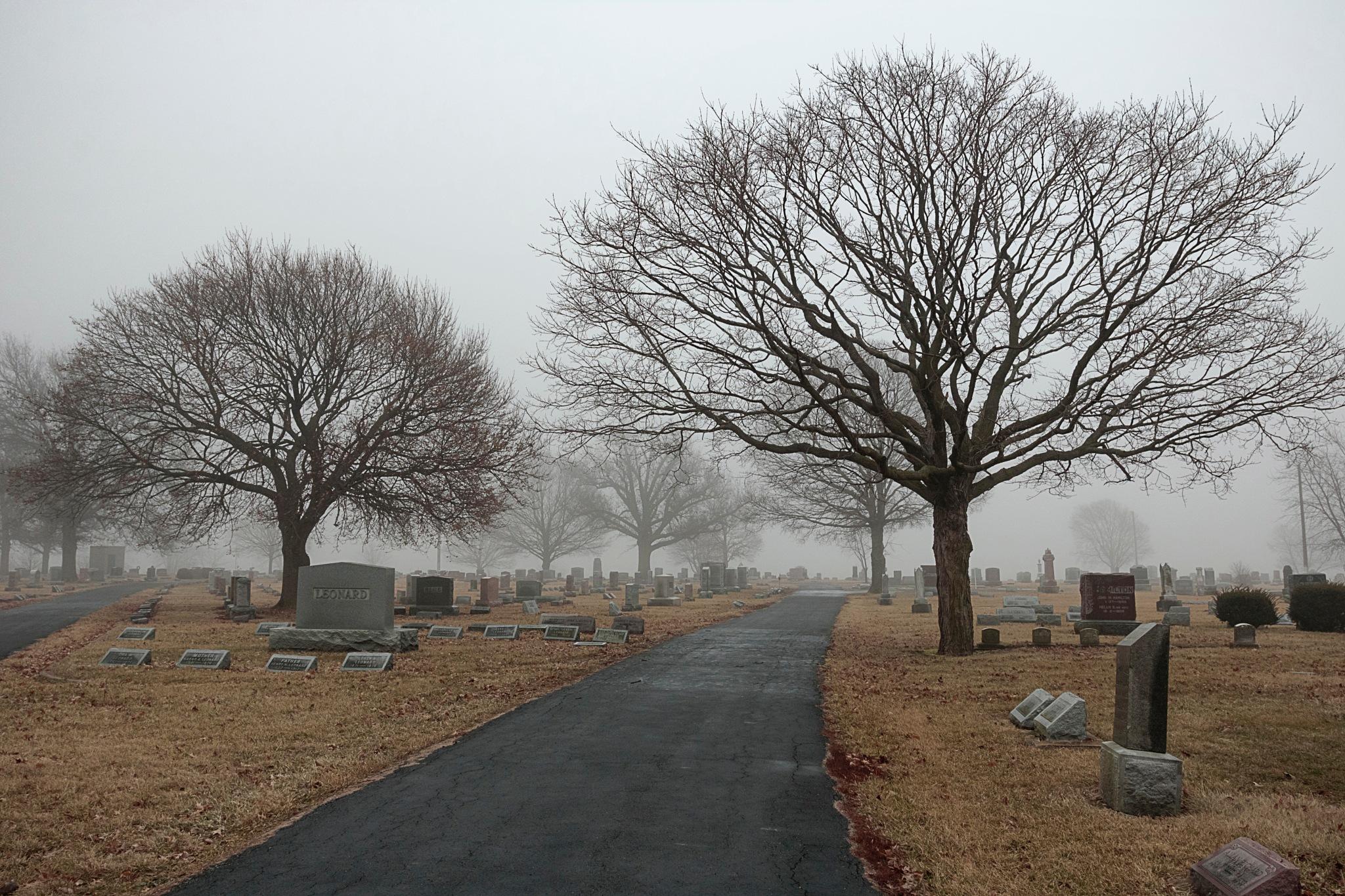 Two More Trees by Martha Glotzhober