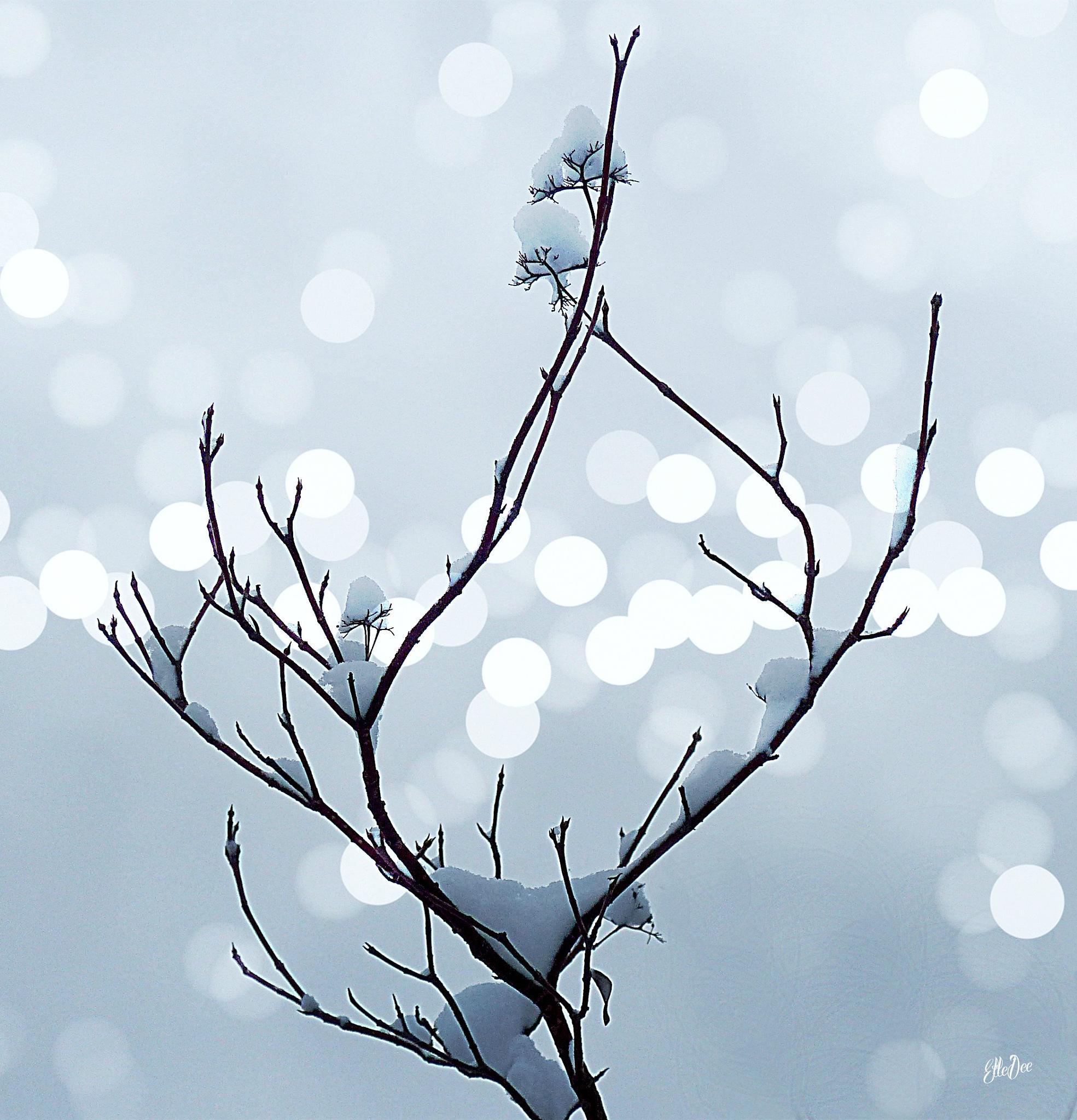 Snow Cotton by lifeandartandstuff