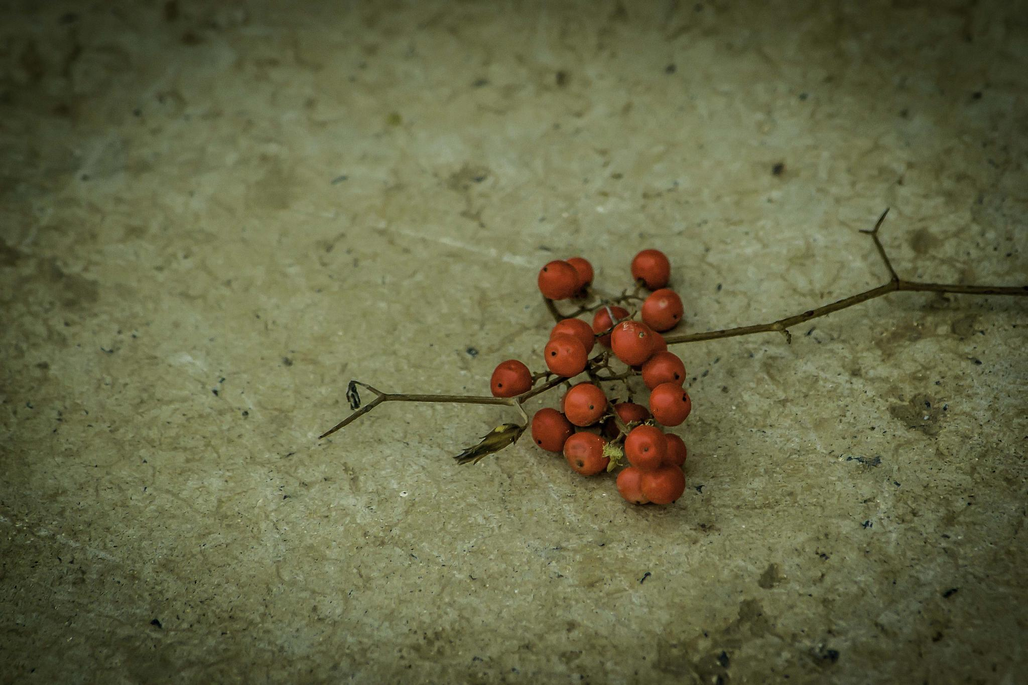 red balls by zoe sartain