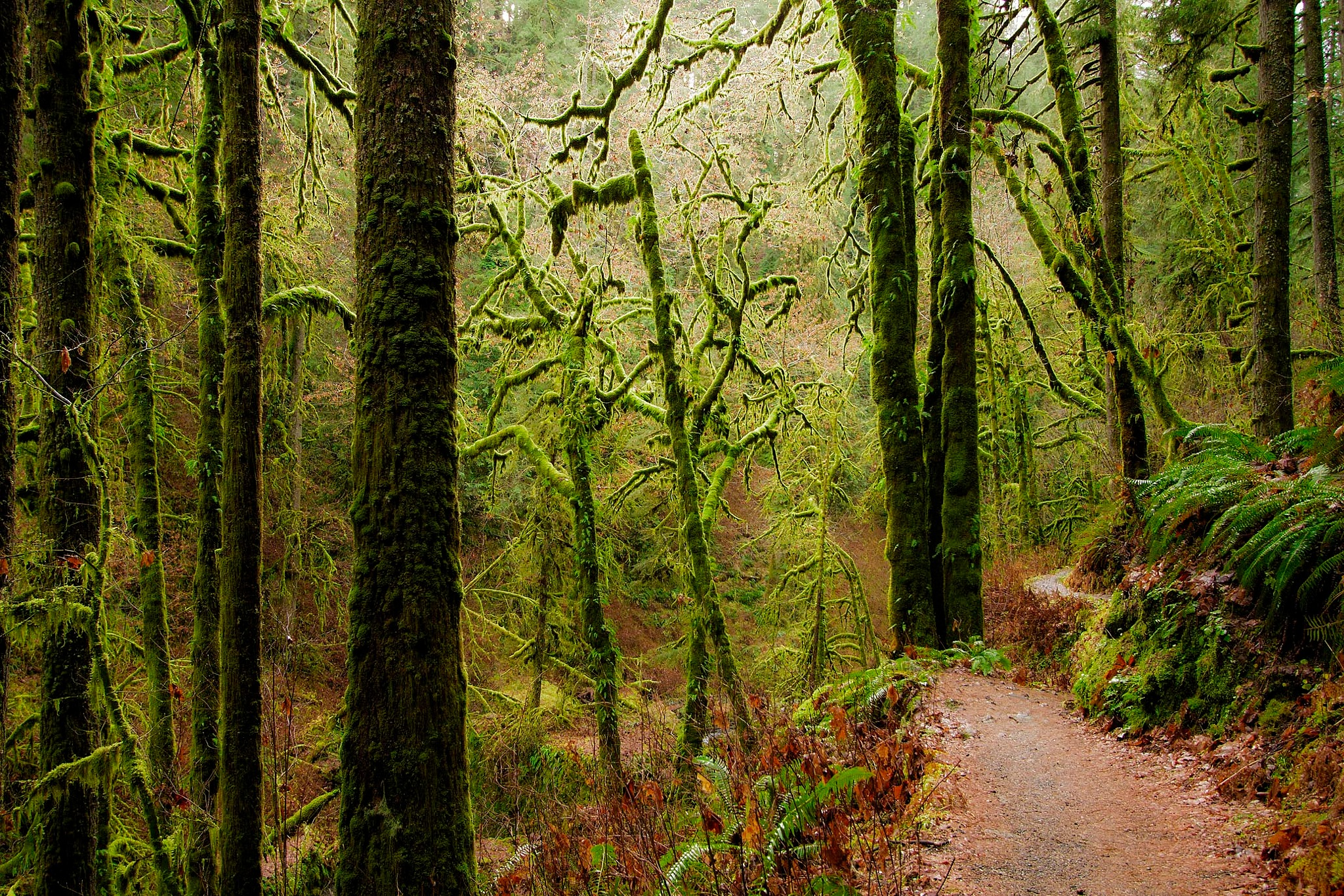 Hike  Path in Silver Falls State Park by shooter4U