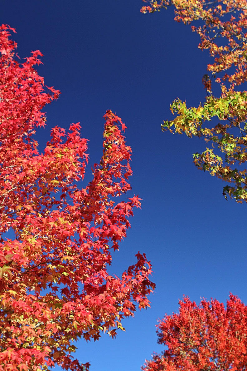 trees with fall colors by shooter4U