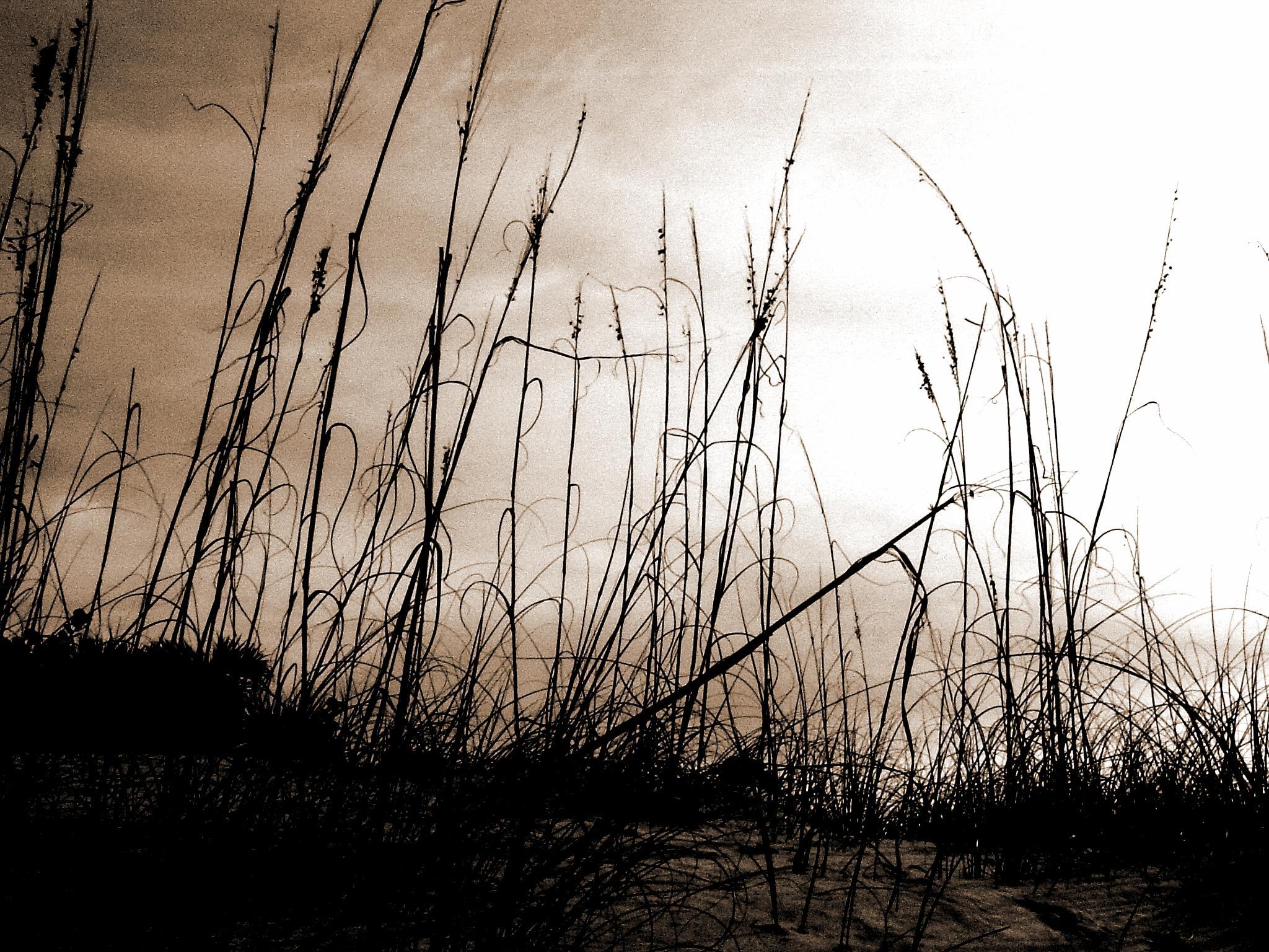St.Pete Beach by docsmity