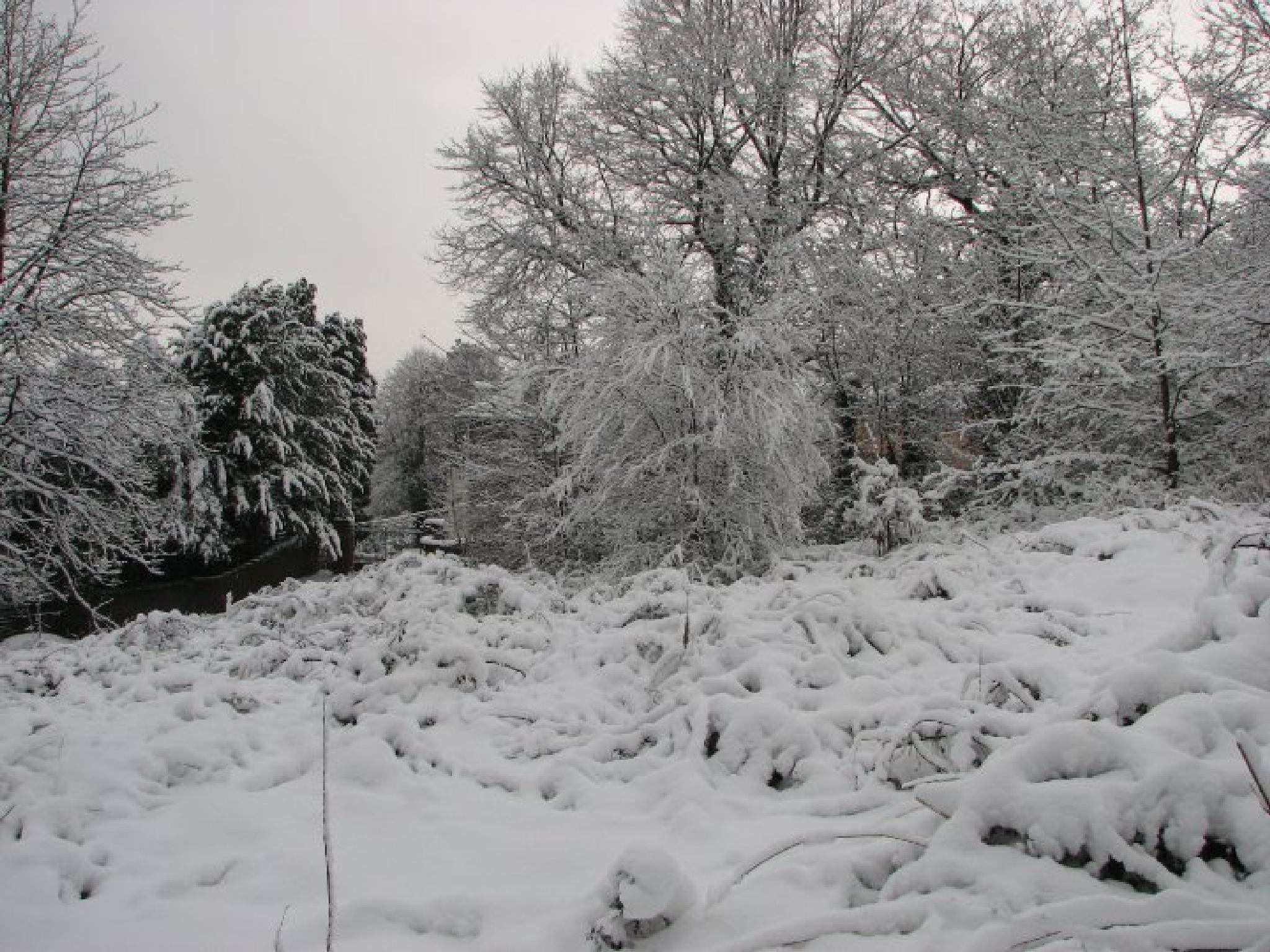 snowy scene, by nigel.seldon.1