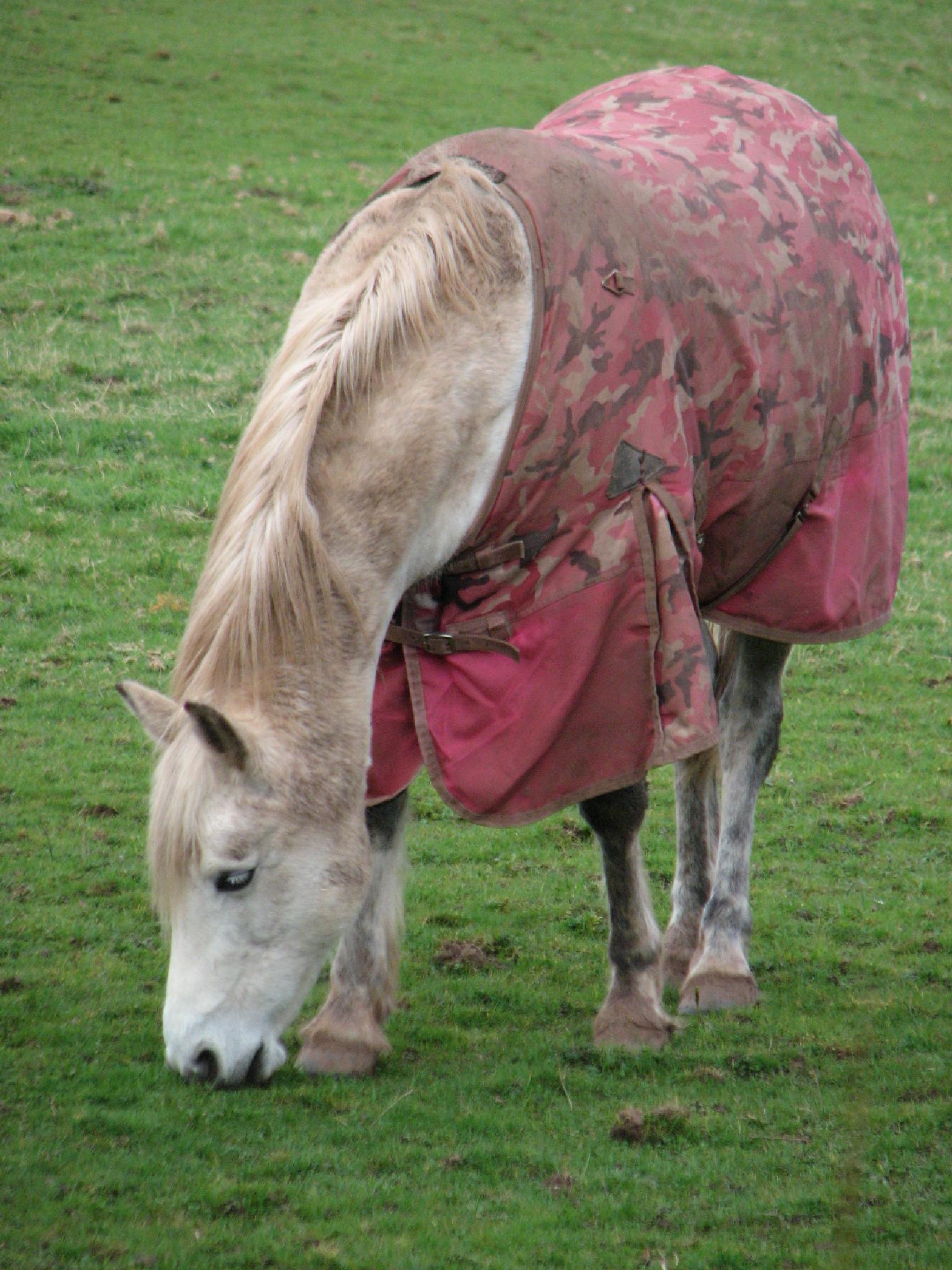 horsie by nigel.seldon.1