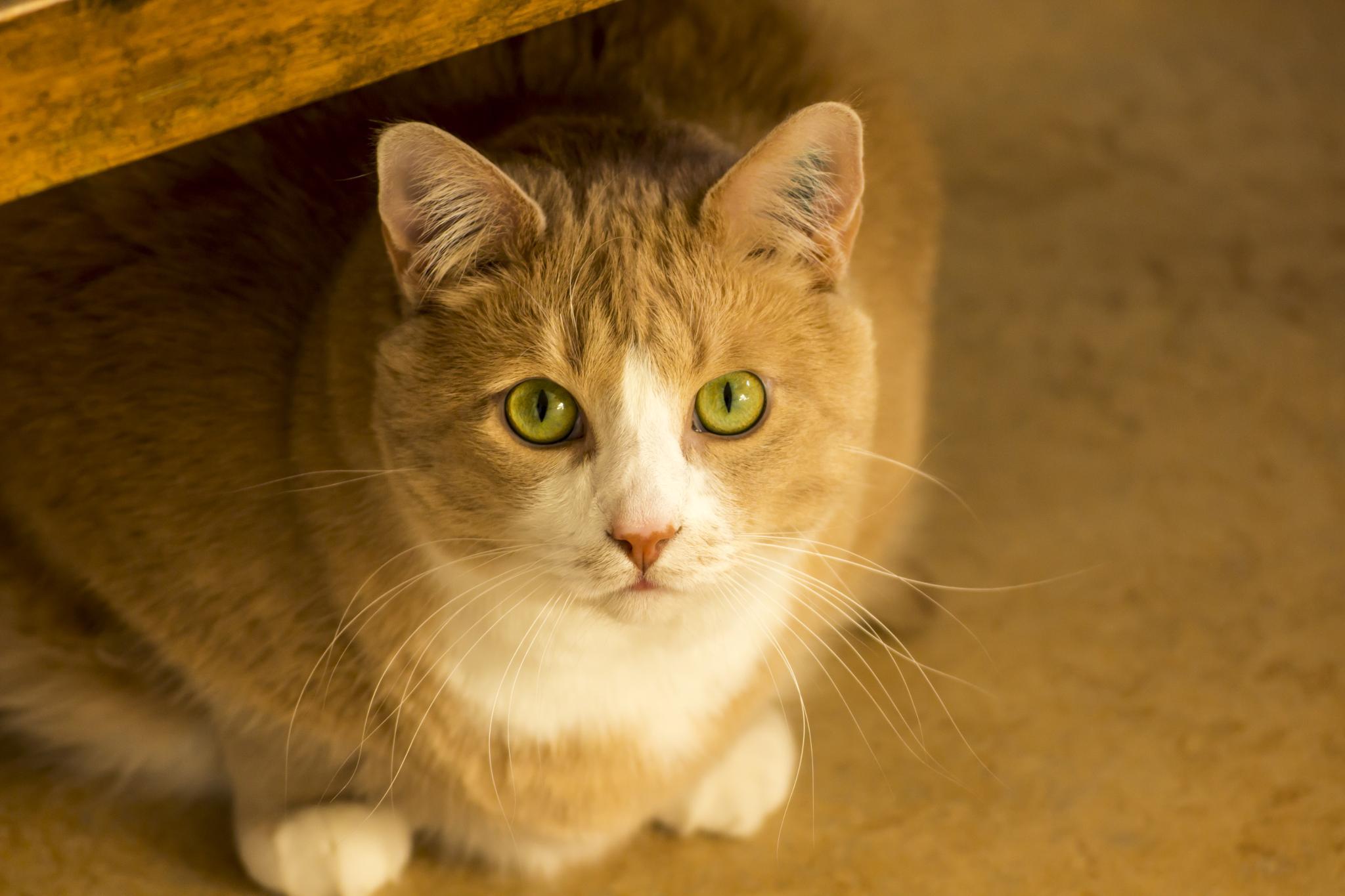 Cat by Daniel Paulsson