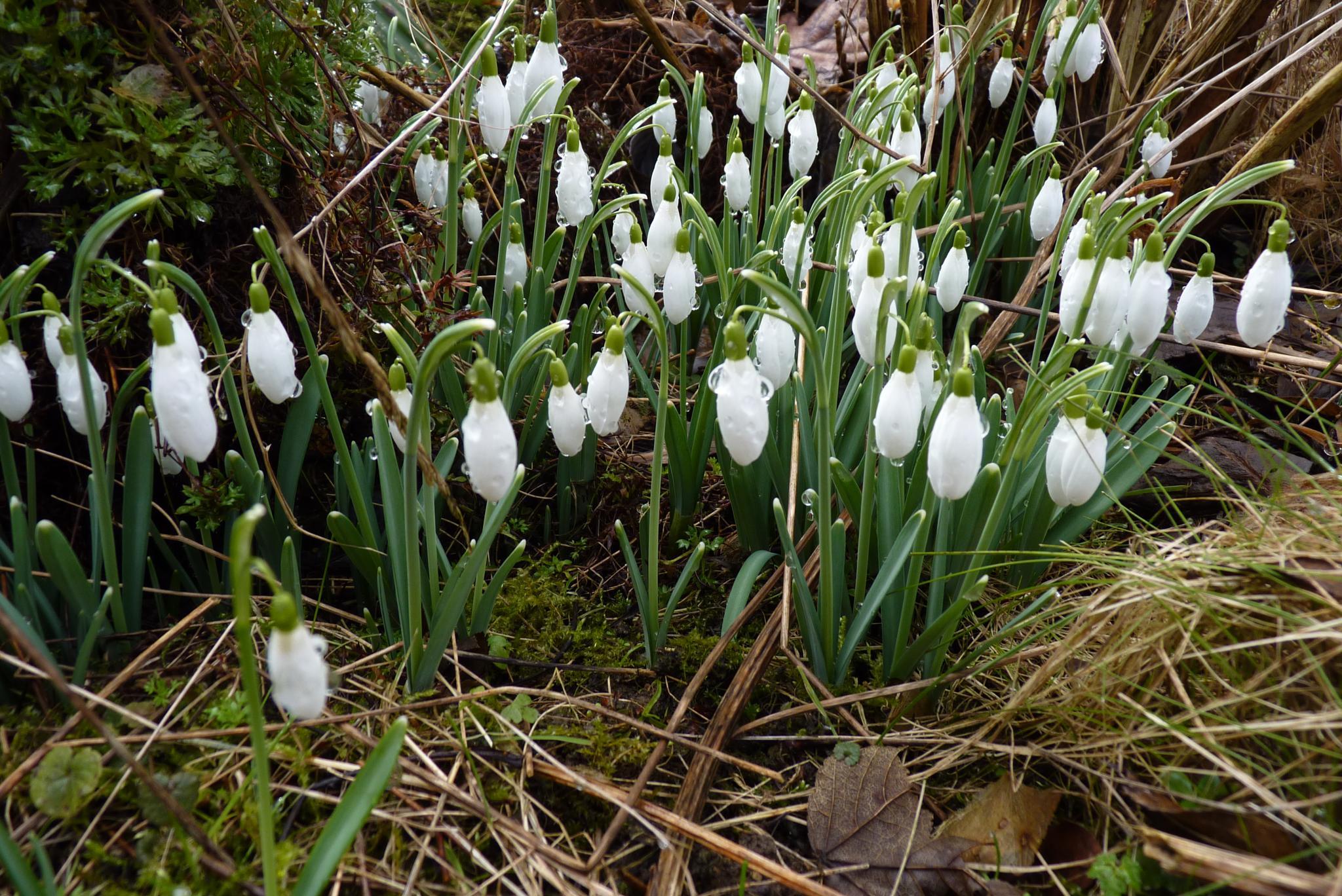 springtime by peetdemos