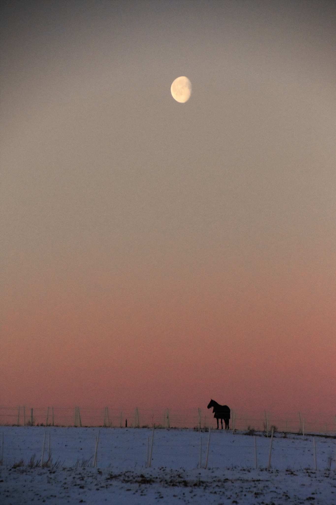 Horse in the morning mist. Norway 27 feb by tina.tomasson