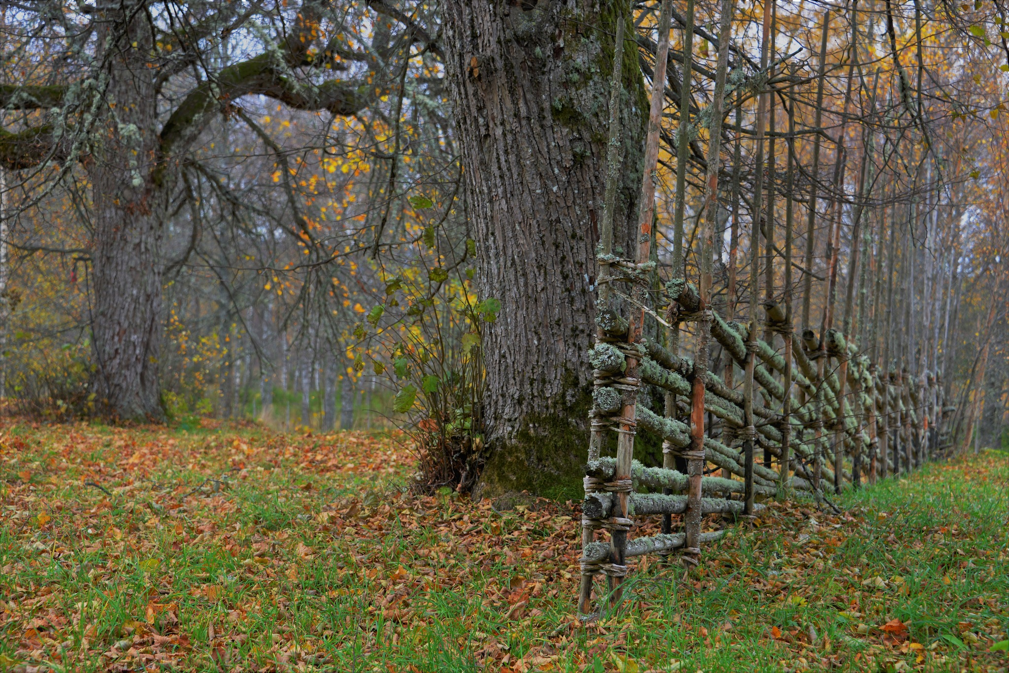 Autumn at the old house by tina.tomasson