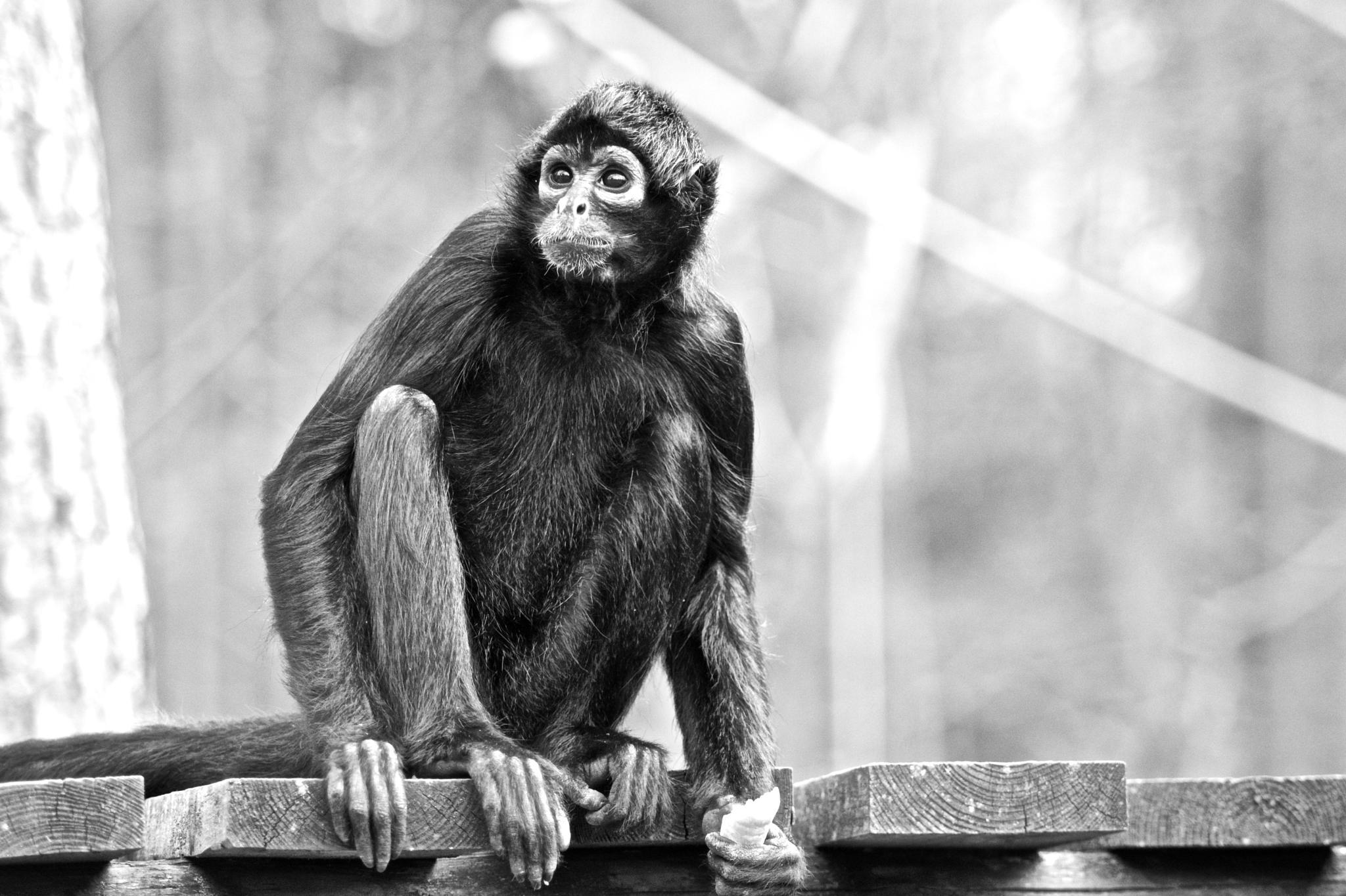 monkey by TaraKiekt.nl