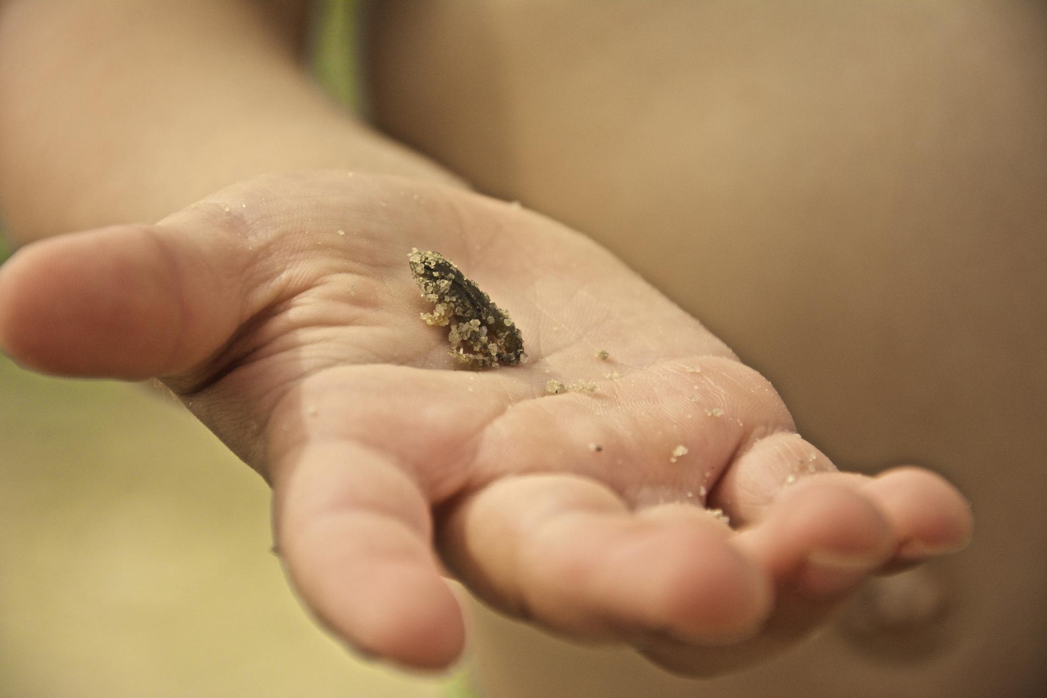 Tiny frog covered in sand  by TaraKiekt.nl