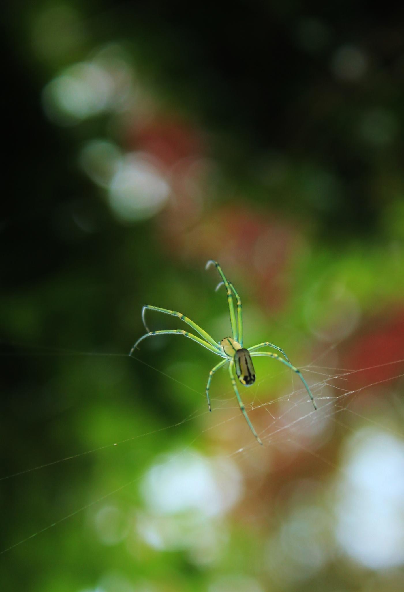 Delicate Spider Dance by BavarianStew