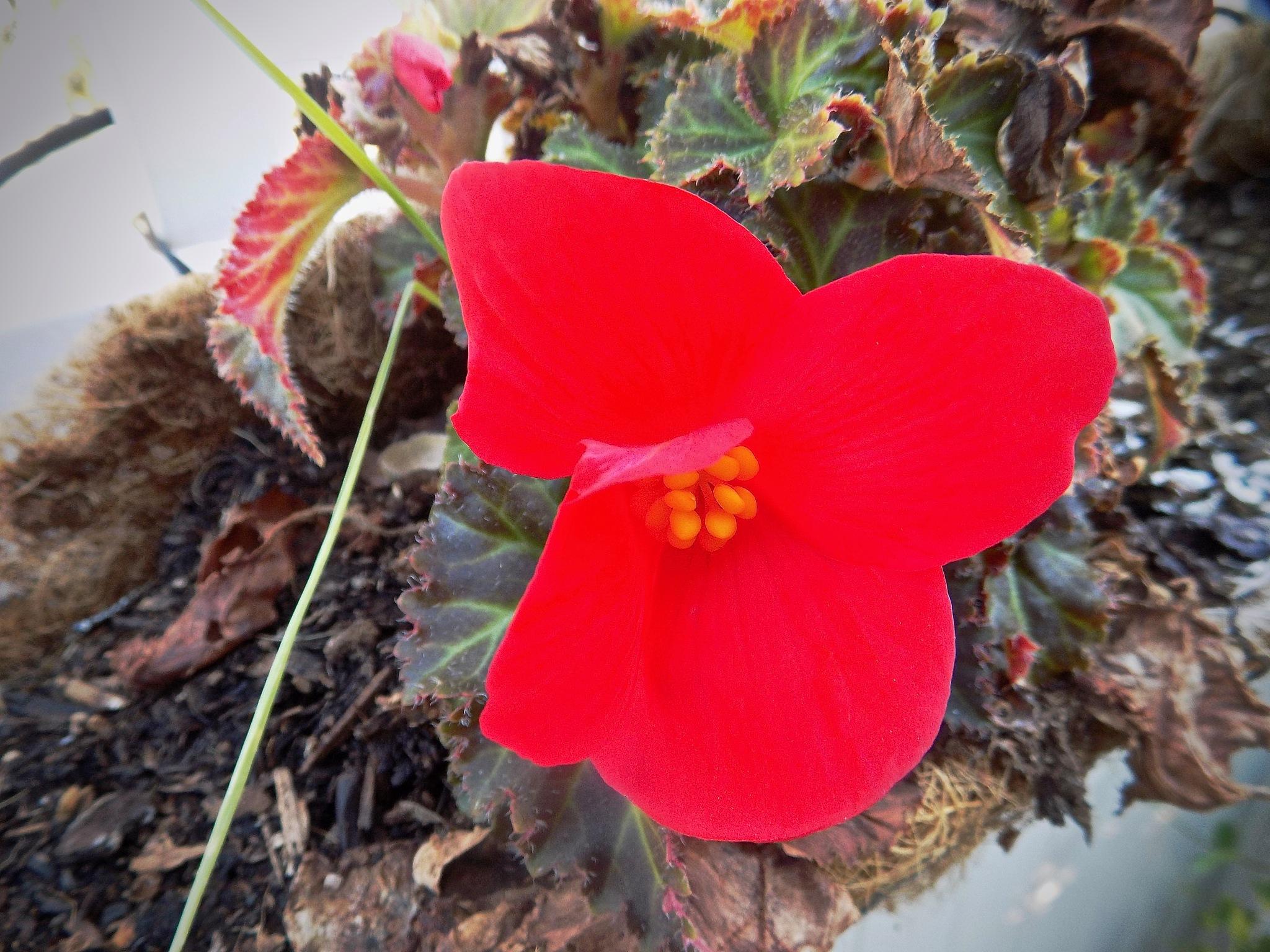 Stark Redness by John Norman Stewart