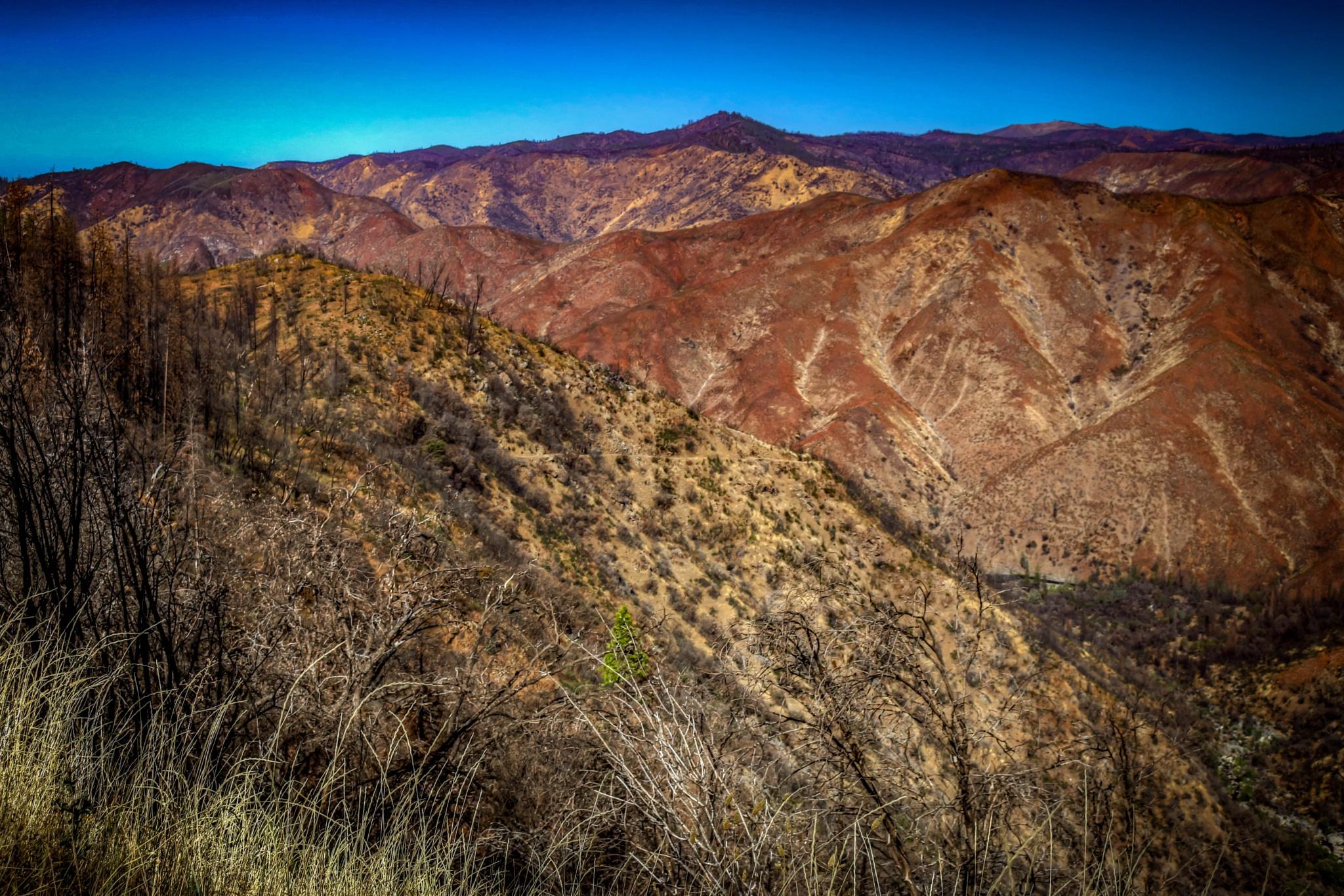 Sierra Foothills  by Catherine
