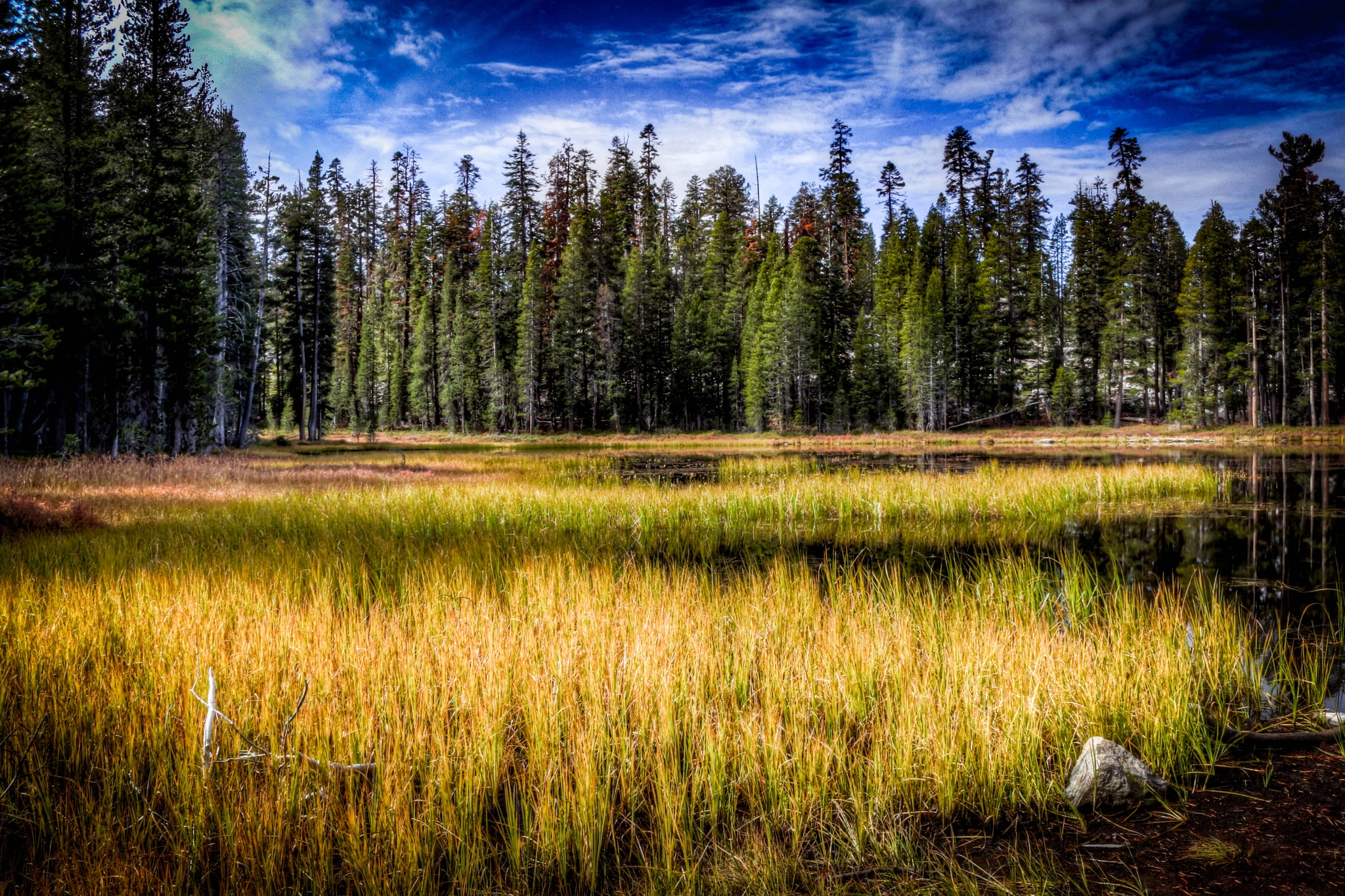 Yosemite National Park pond and meadow by Catherine