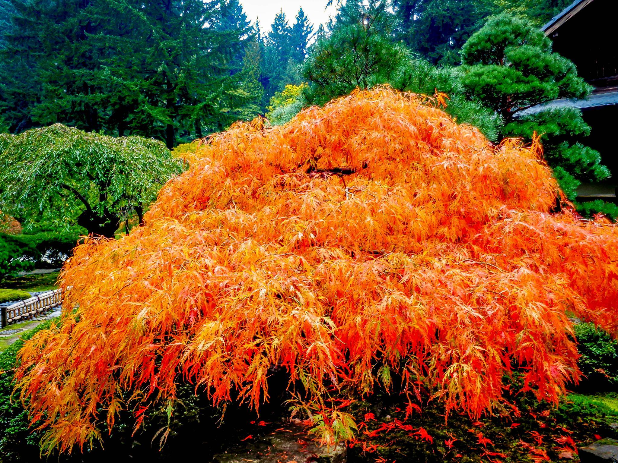 Japanese Gardens, Portland, Oregon by Catherine