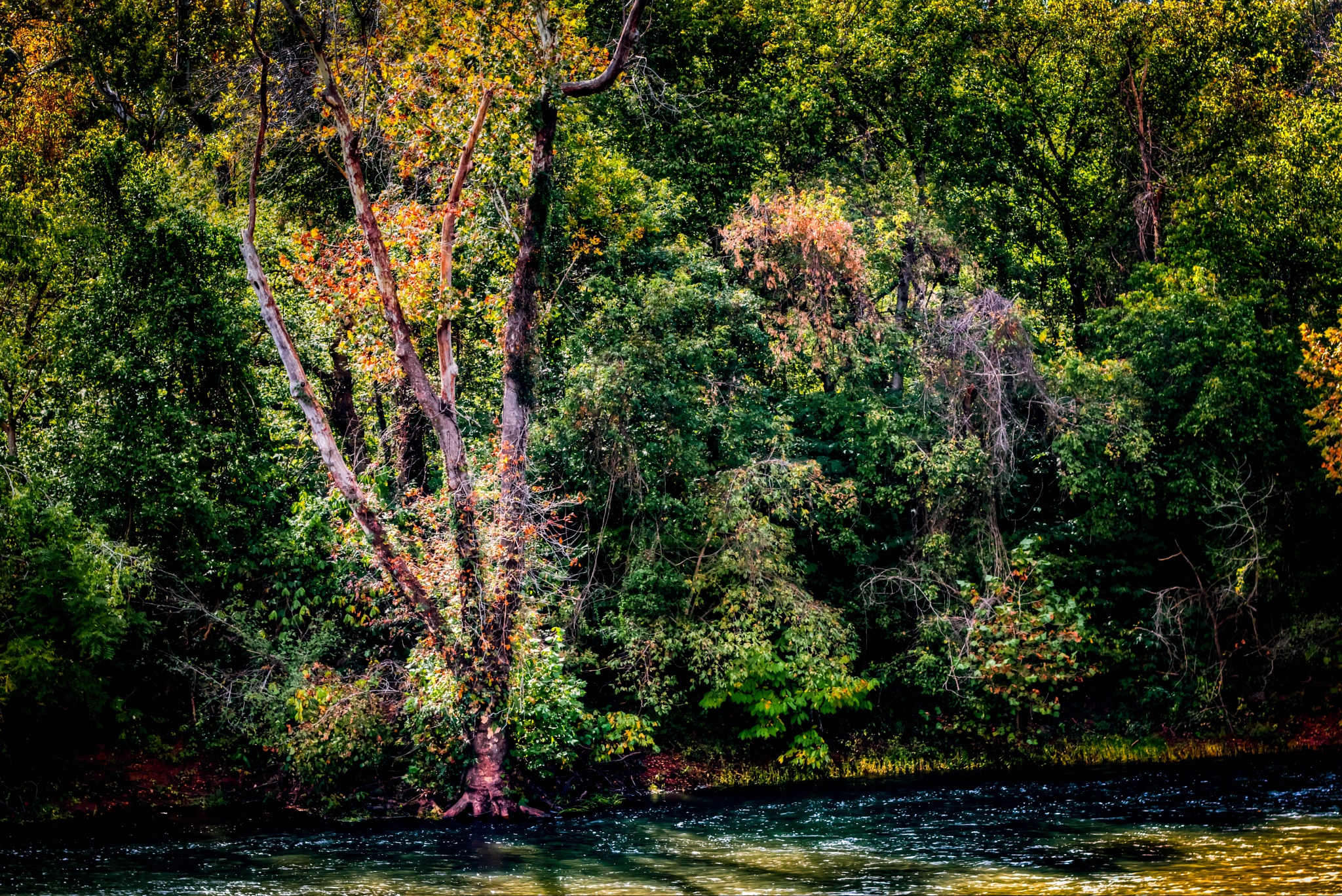 Riverbank on James River by Catherine