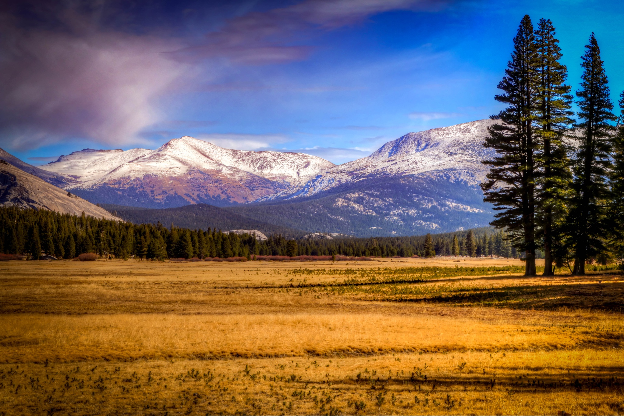 Yosemite Meadow by Catherine