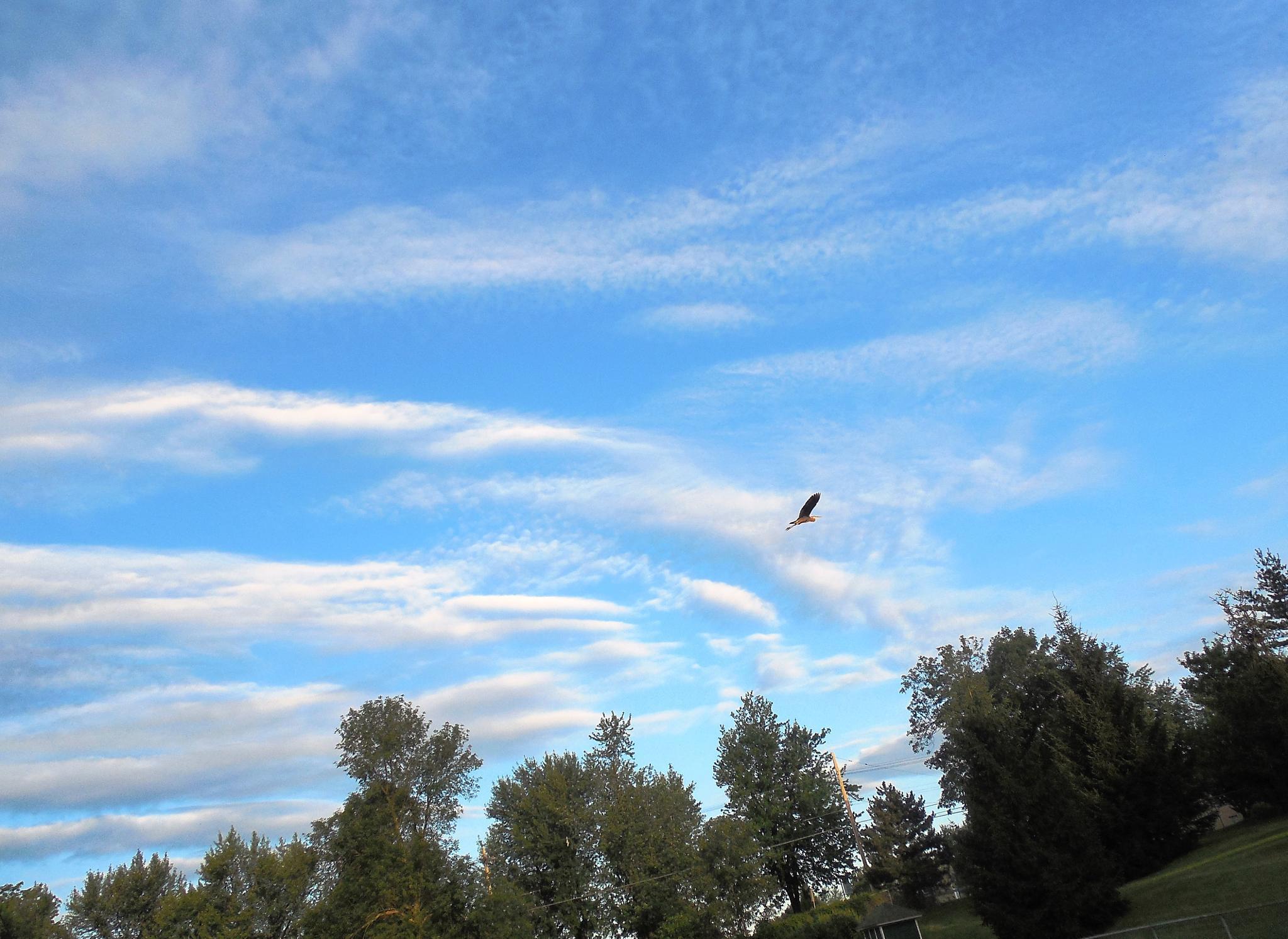 fly away  by Tom Mazur
