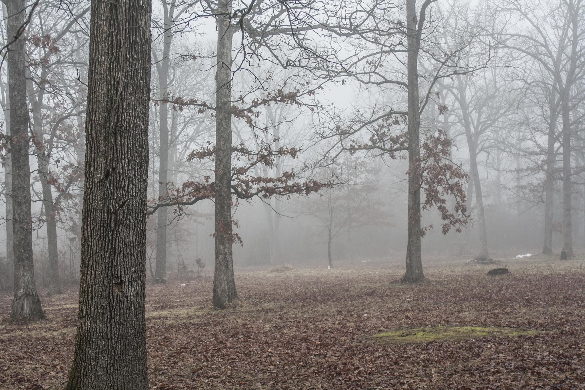 Foggy Day by Andrew Hershfeld
