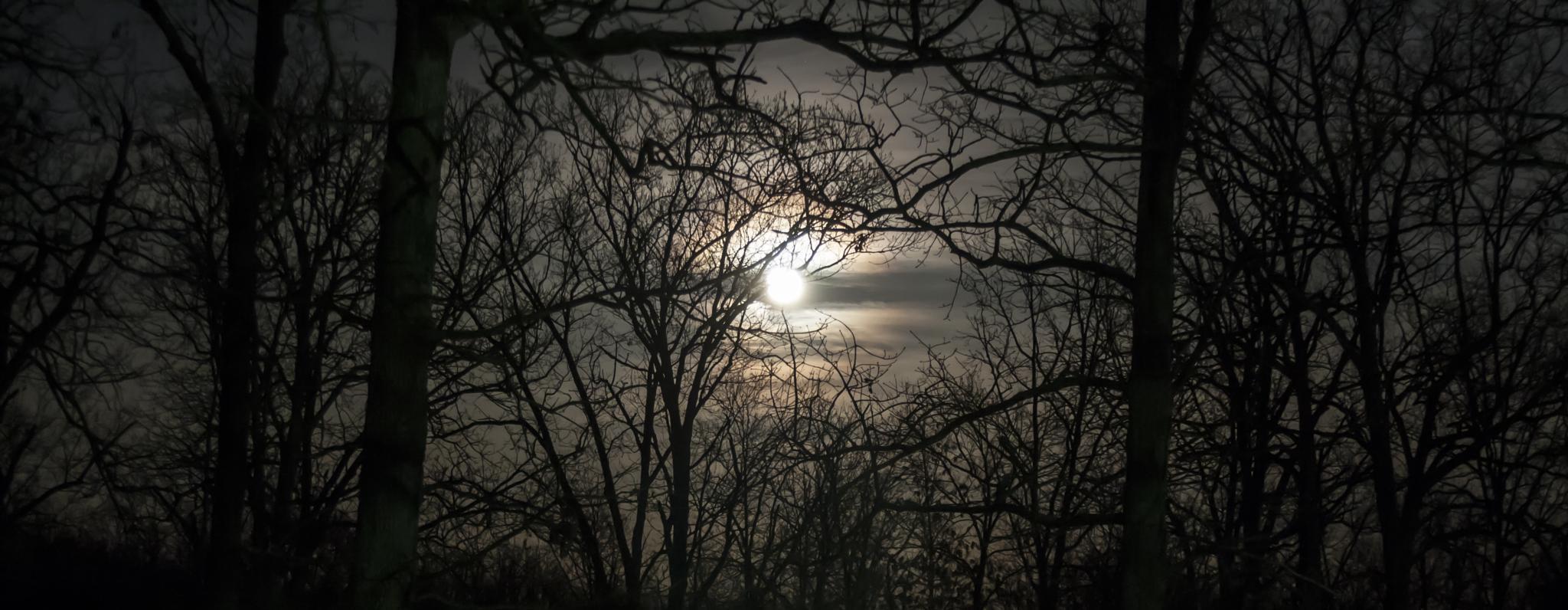 Full Moon by Andrew Hershfeld