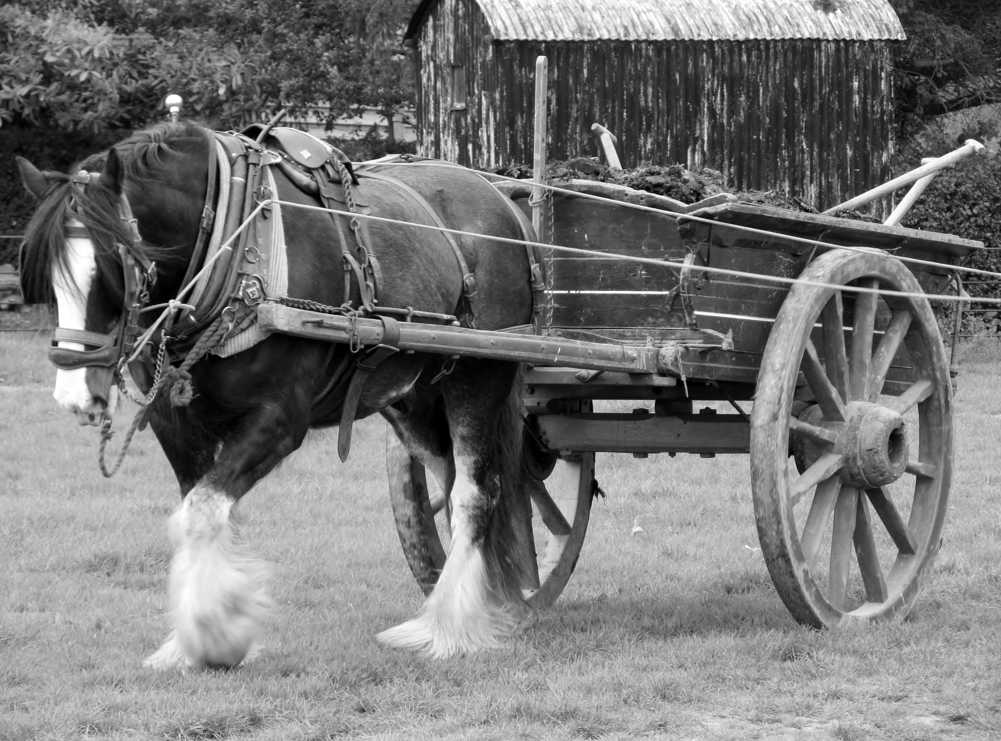 Horse & Cart by RonKelly