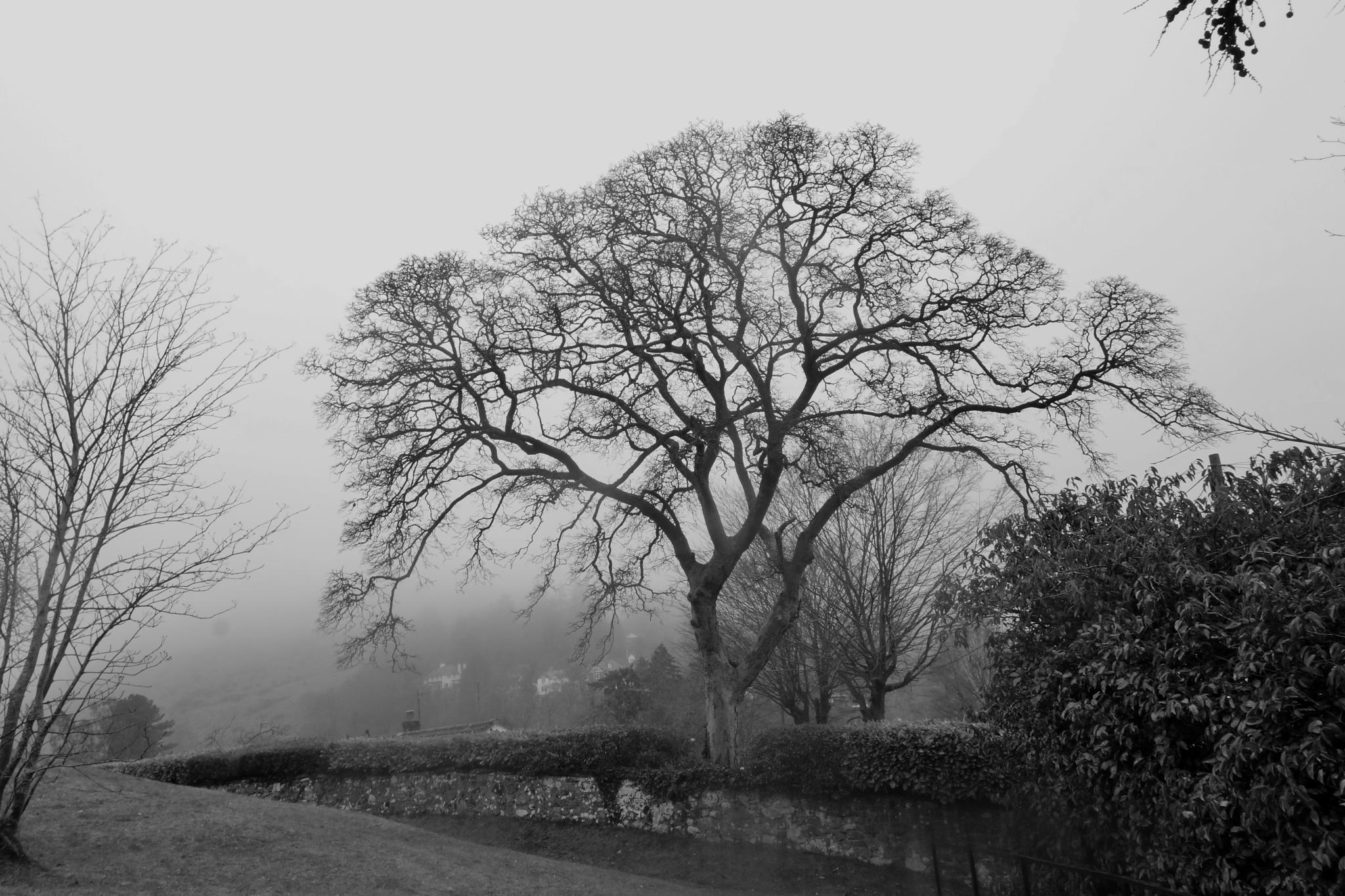 Tree in the fog by RonKelly