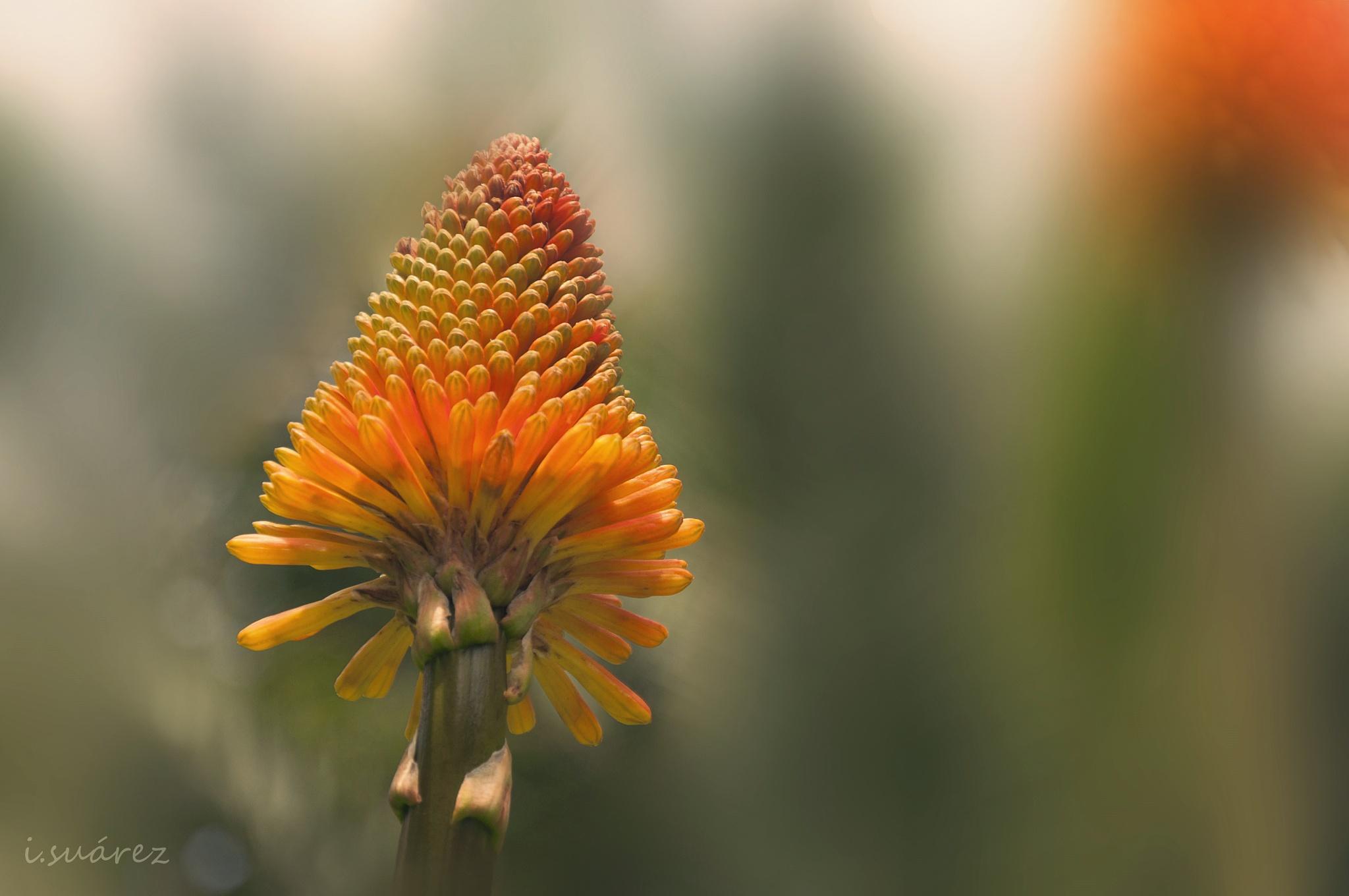 Flora by inmaculadasuarezfleitas