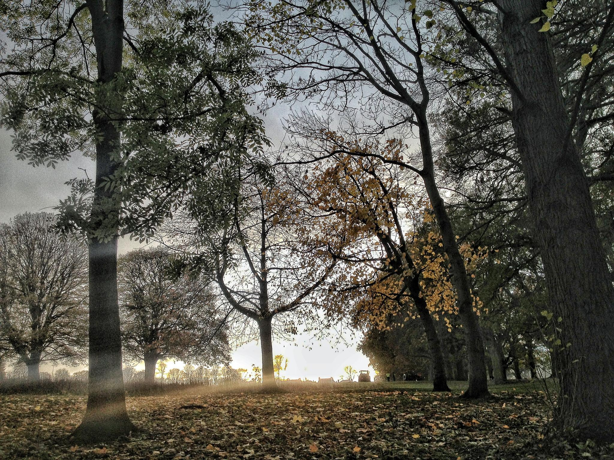 Autumn 2013 by Luke Barklamb