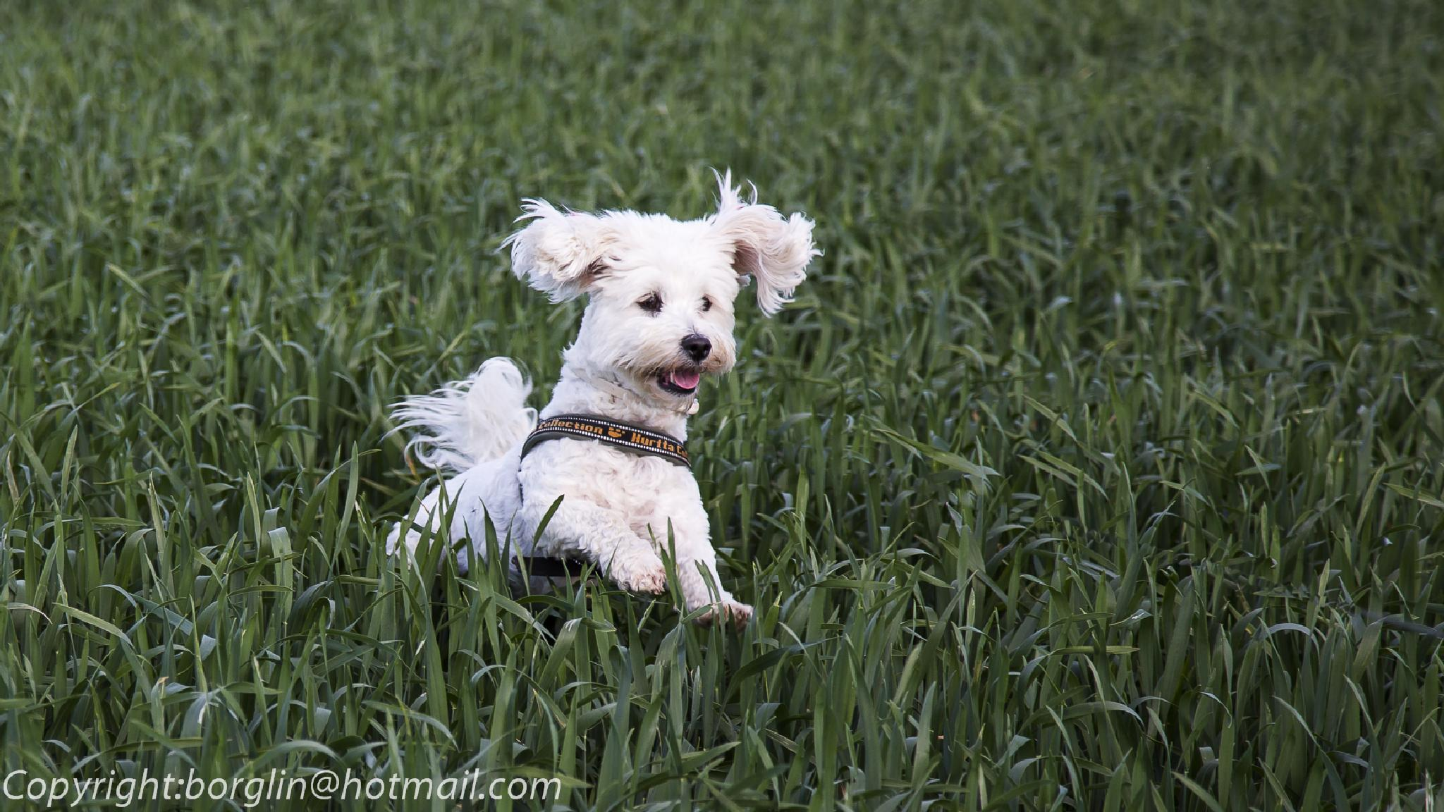 Glad och lekande hund     Happy and playful dog by Mats Borglin