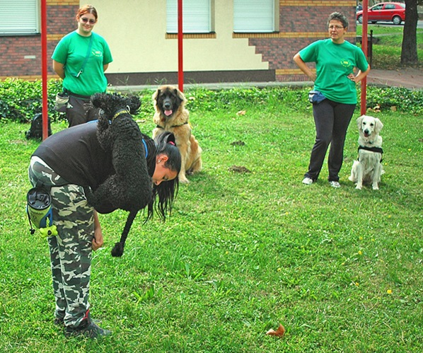 dog Training by Event photo- video