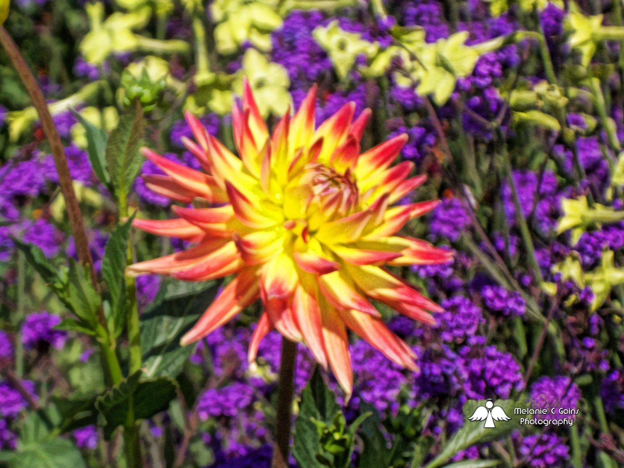 Pointy Flower by some1sangel