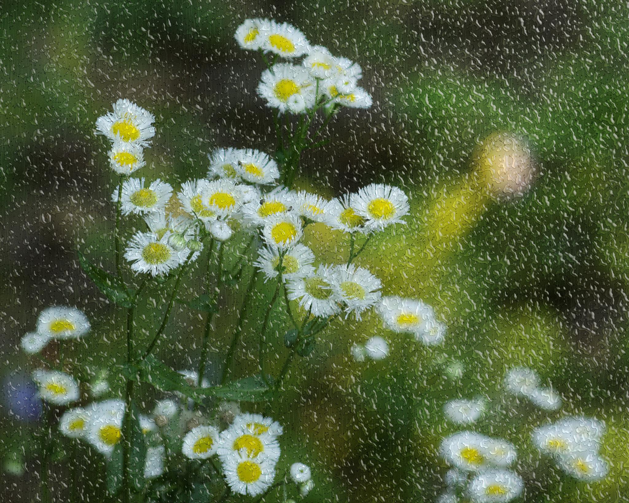 Untitled by Lisa Brooks
