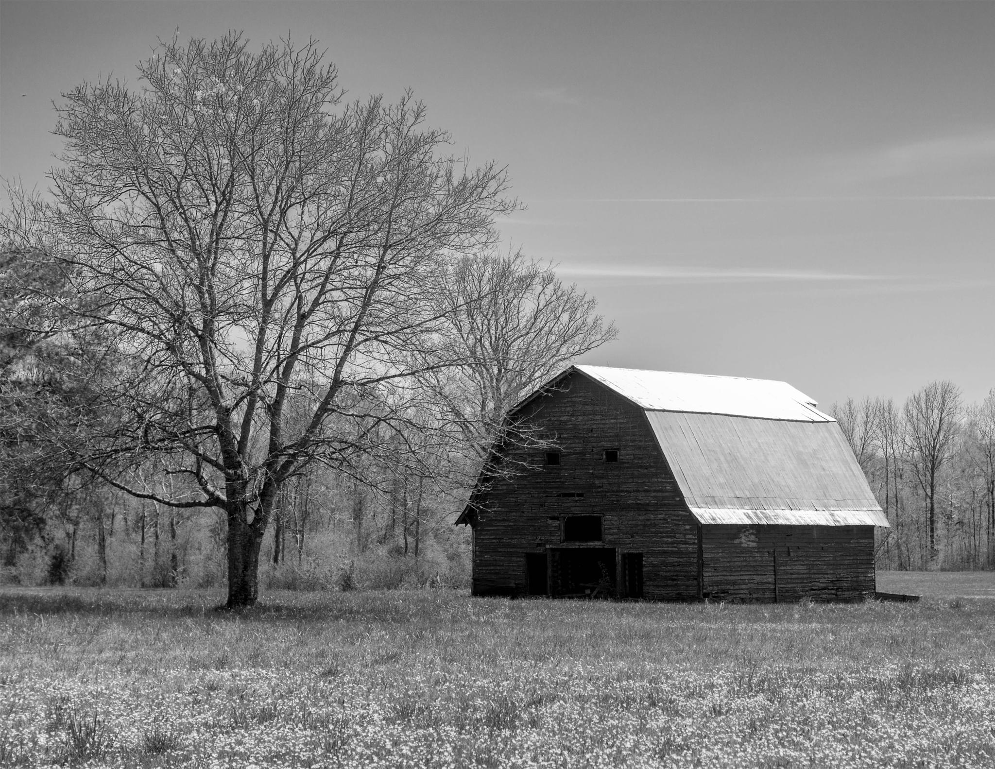 Old Barn by Lisa Brooks