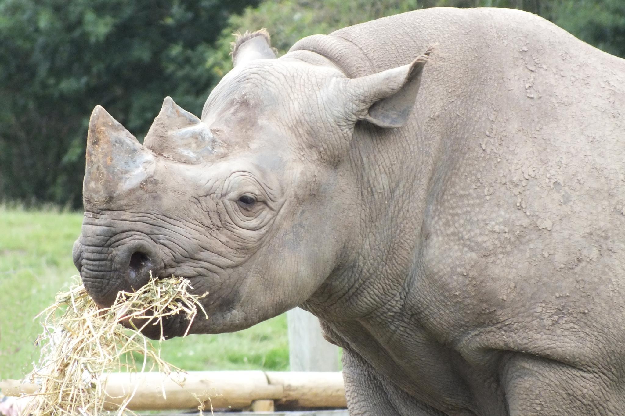 Rhino by jane.blackburn.58