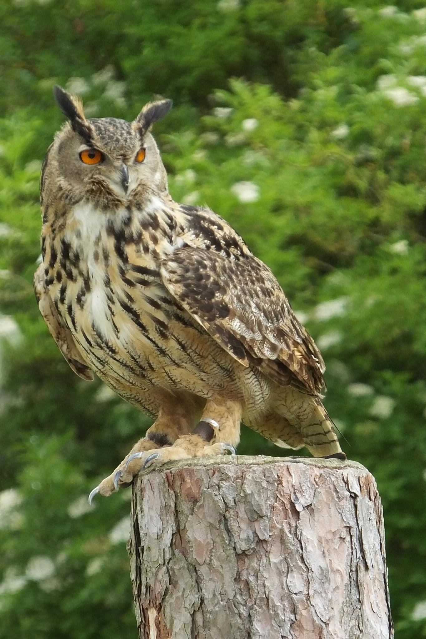 Owl by jane.blackburn.58
