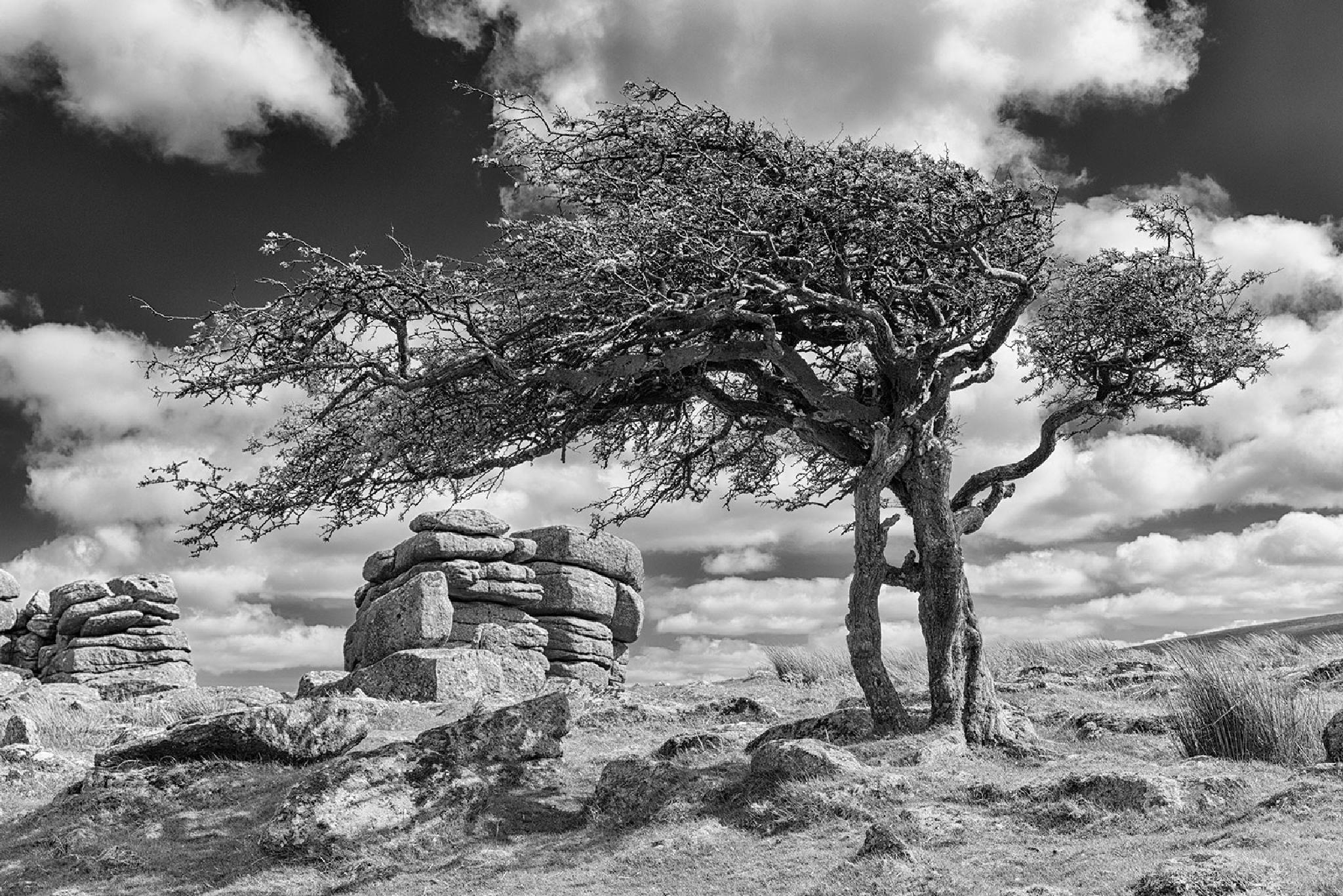Trees on Dartmoor by cat66chapman