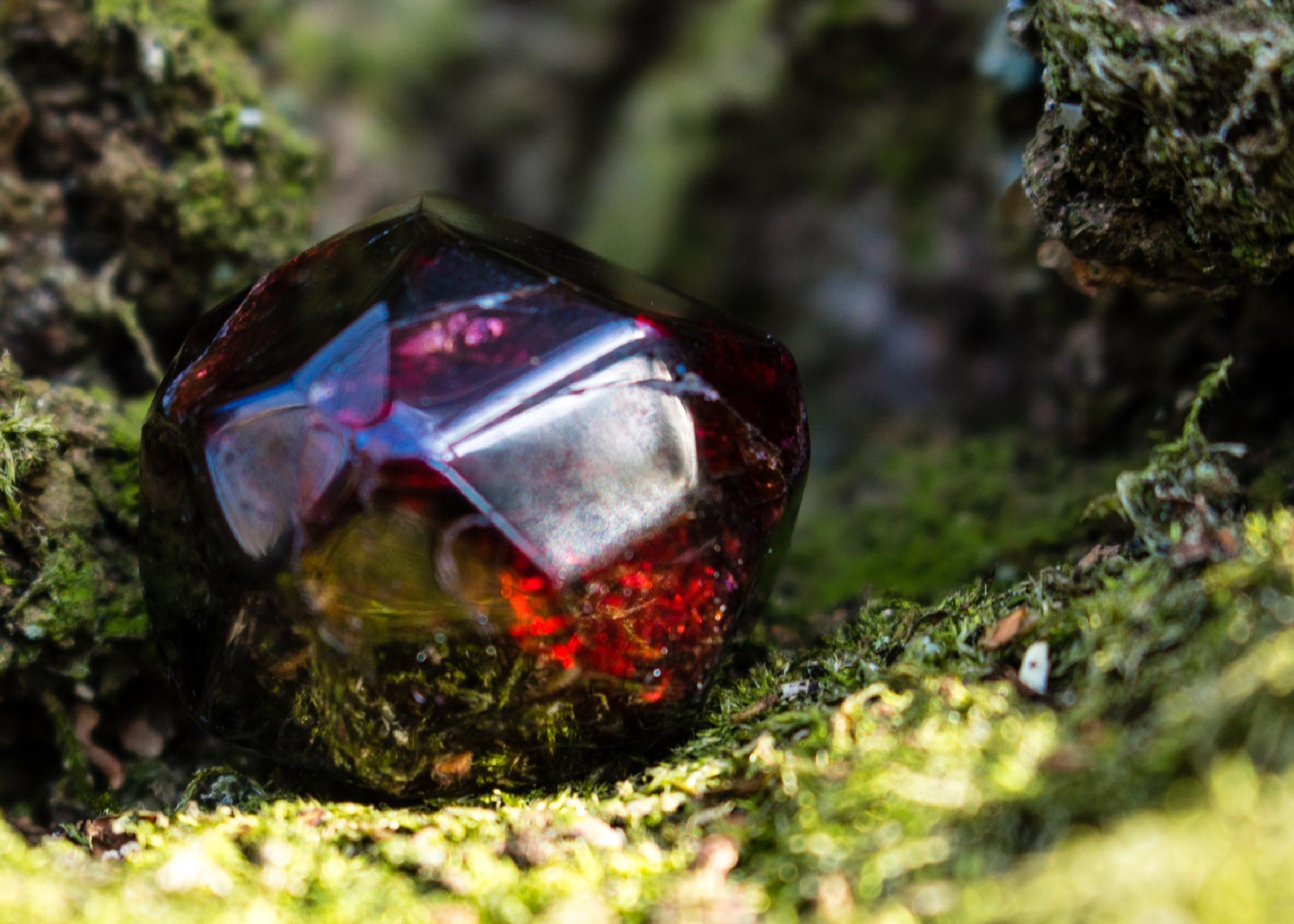 garnet in the forest by tony billings