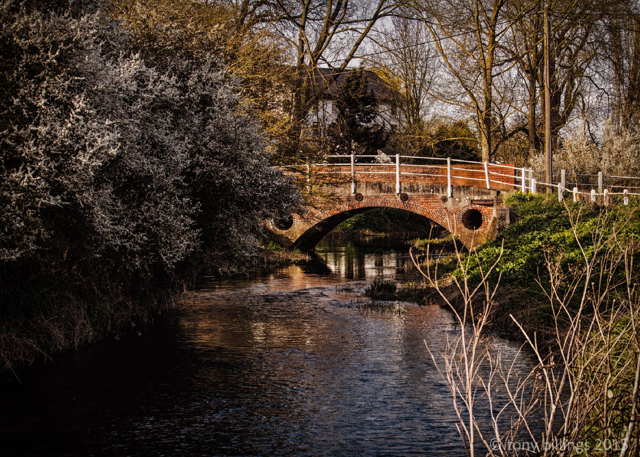Greys Mill Bridge by tony billings
