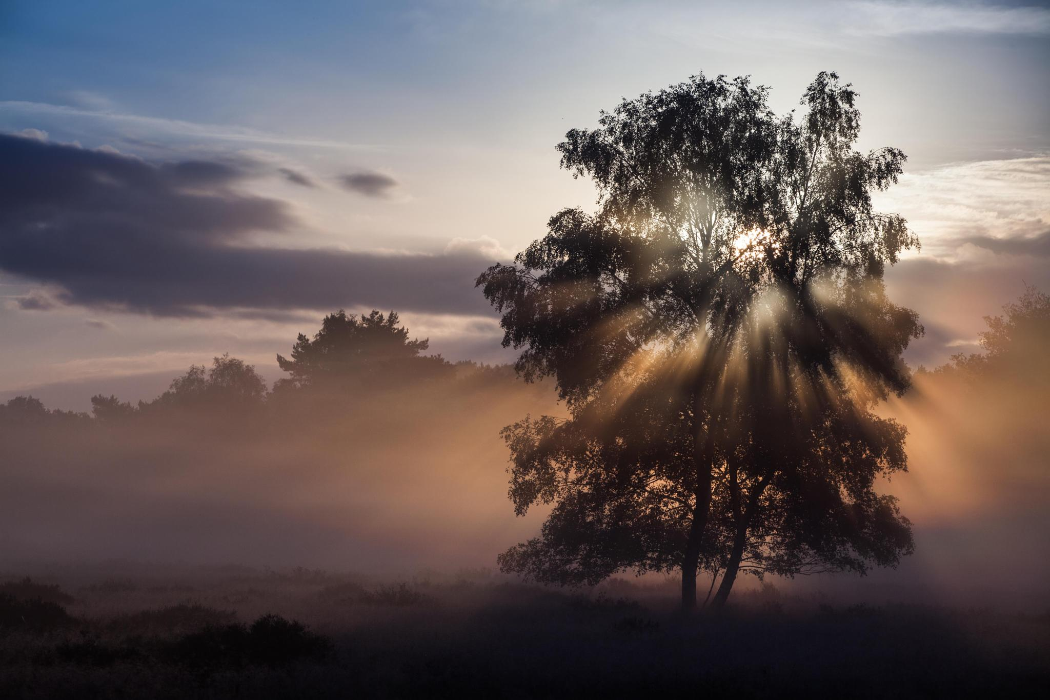 Chasing the light by Hans Koster