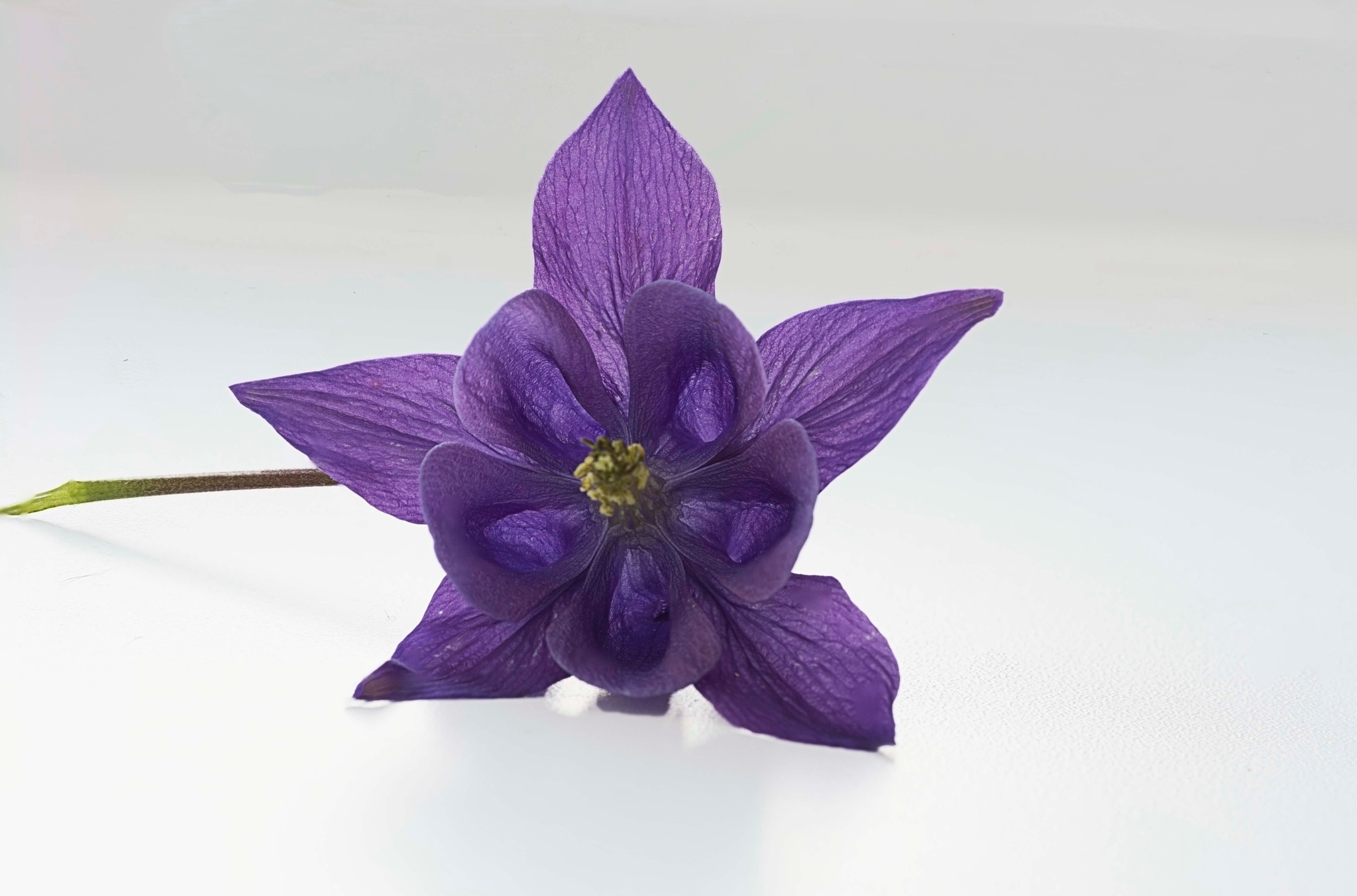 Photo in Nature #flowers #macro #nikon d7100 #sigma 105mm #nature
