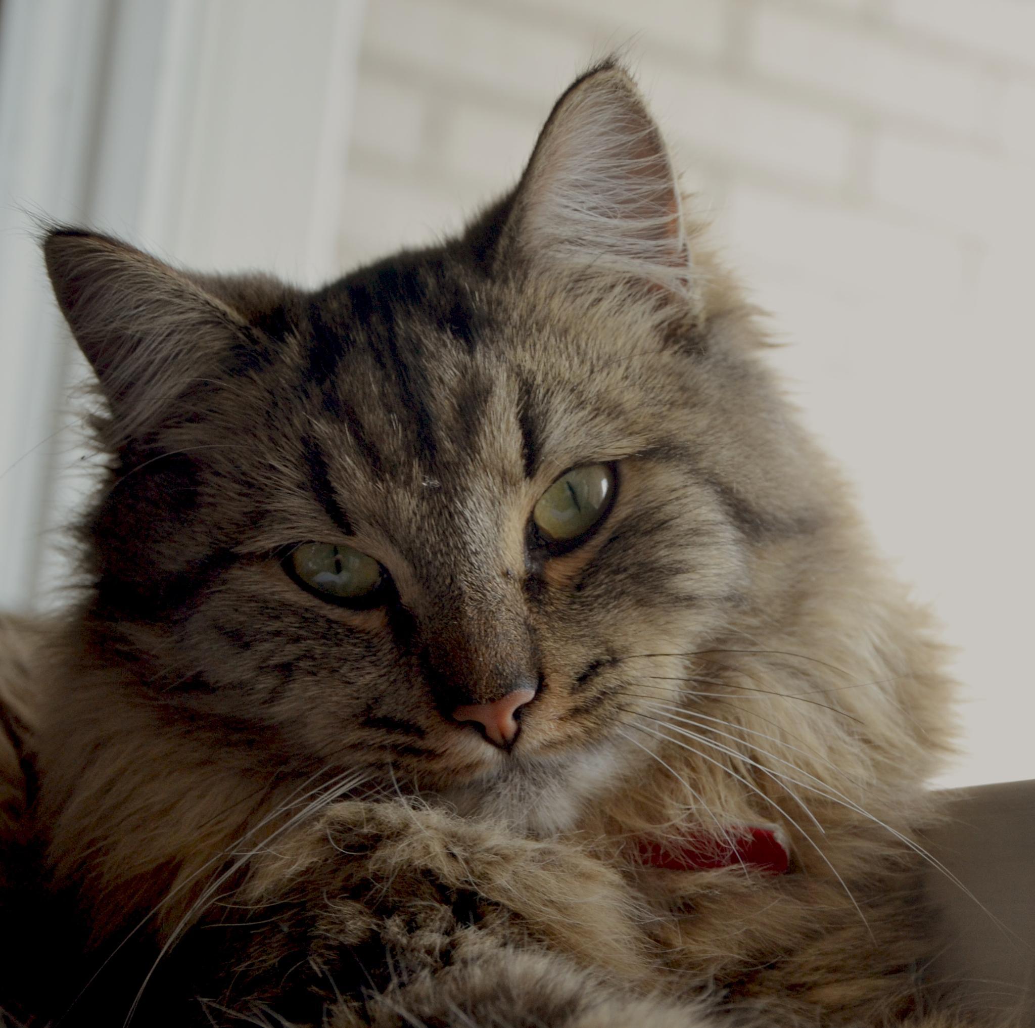 Photo in Portrait #cat #katt #portrait #porträtt #nala