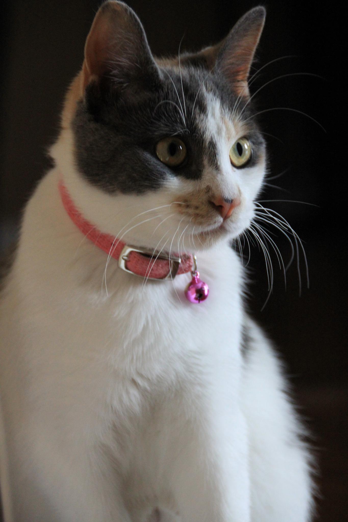 Jasmine Portrait by Carol.S