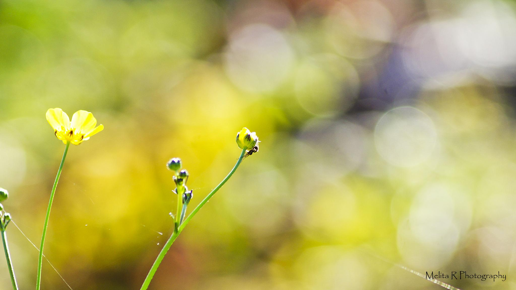 Untitled by Melly Photography