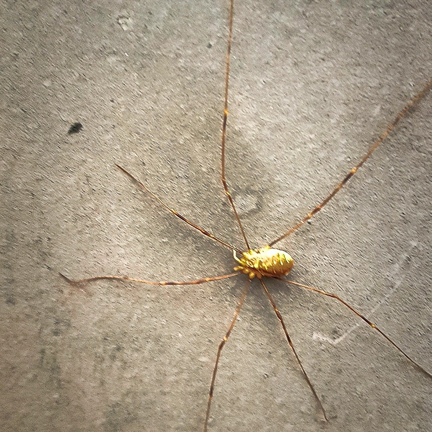 Spider by goran.egevad